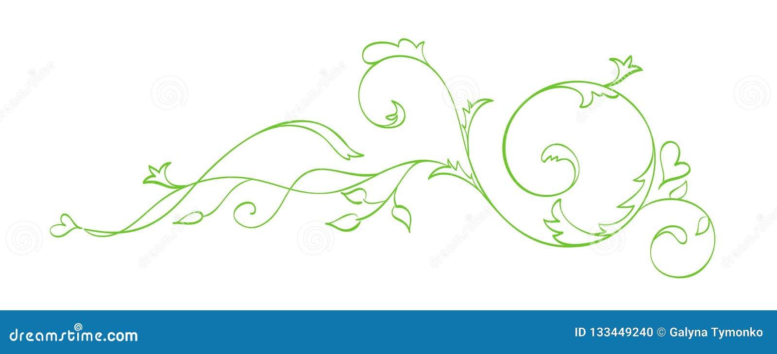 Zielona Wektorowa ręka Rysujący Kaligraficzny oddzielacz Wiosna zawijasa projekta element Kwiecisty światło stylu wystrój dla wit