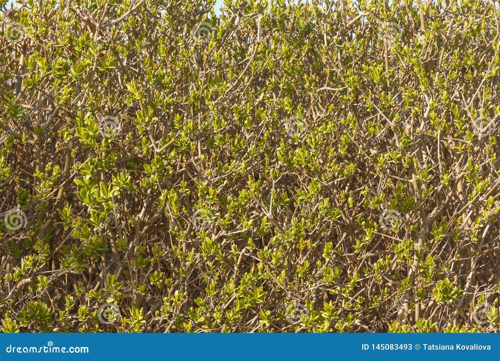 Zielona wiosna Opuszcza t?o Ekologia horyzontalny widok
