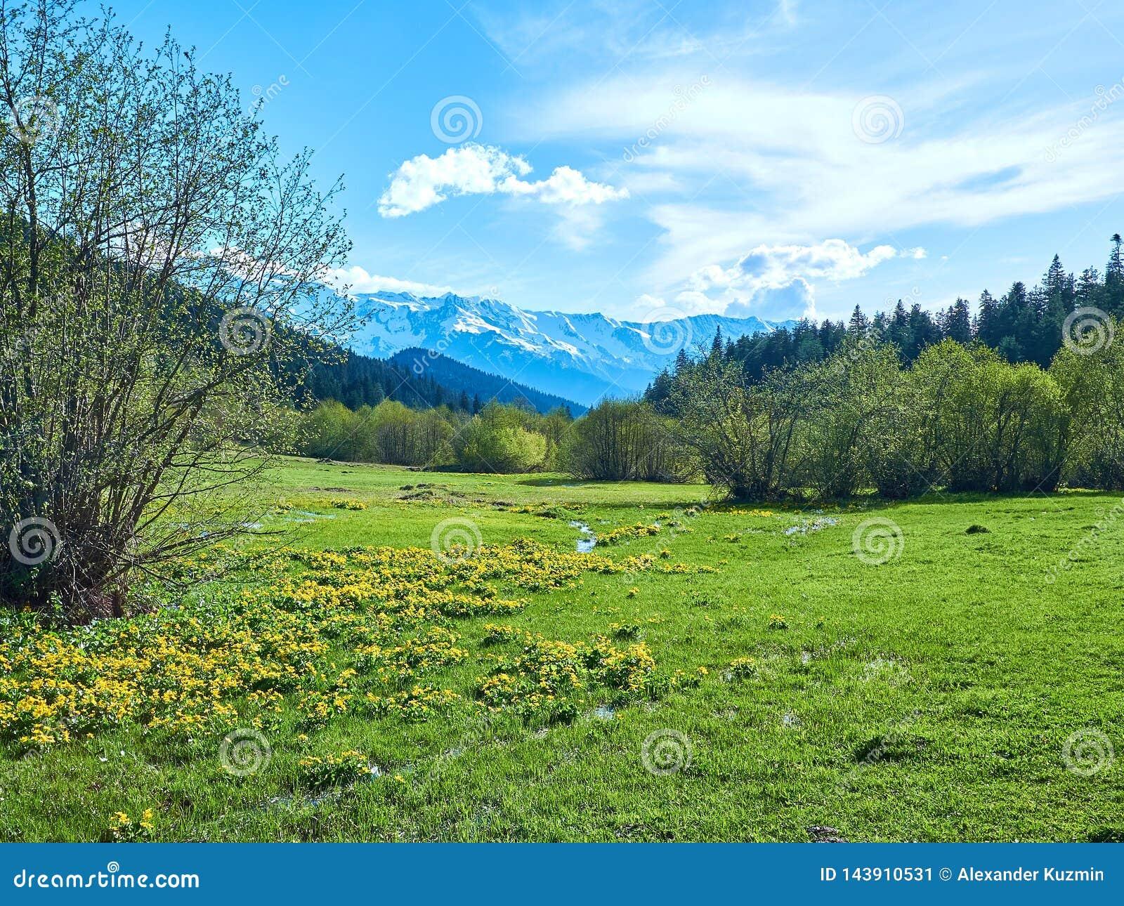 Zielona wiosny łąka w górach Svaneti