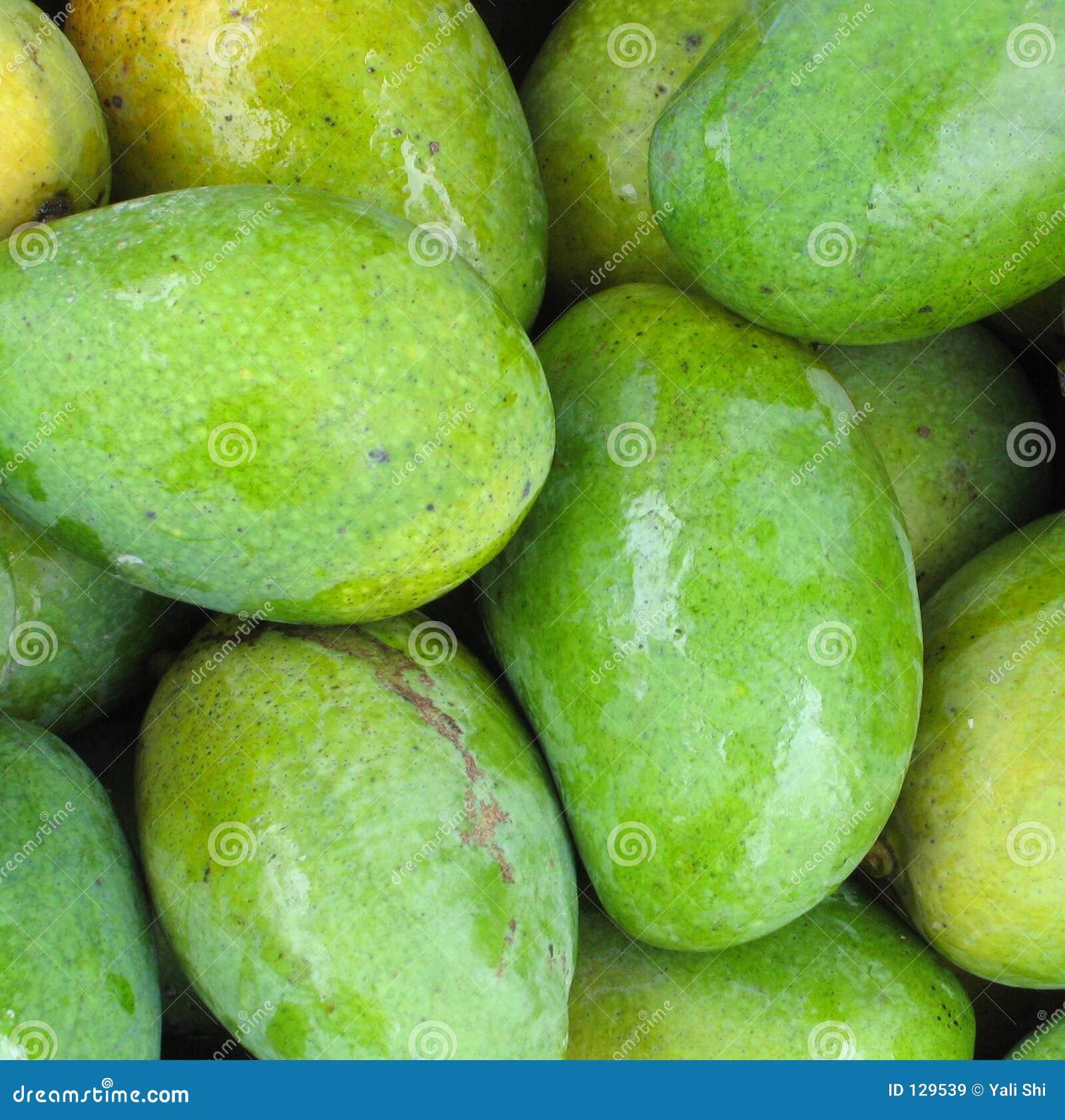 Zielone świeże mango