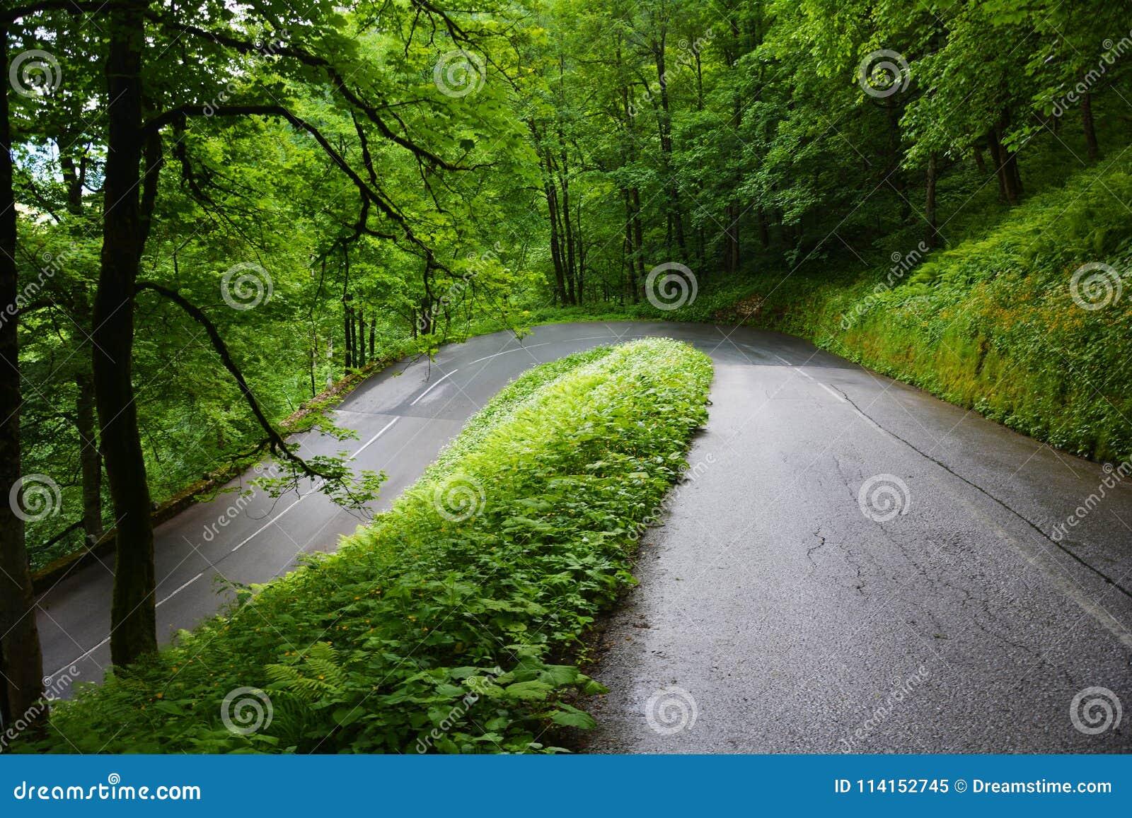 Zielone drogi w drewnach