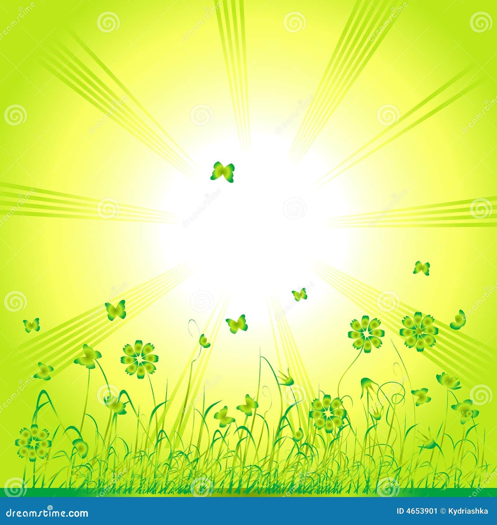 Zielone lata trawy tło