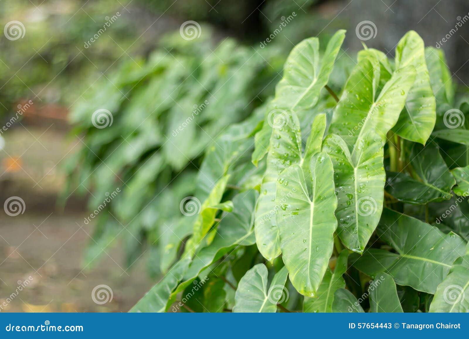 Zielone liści tło