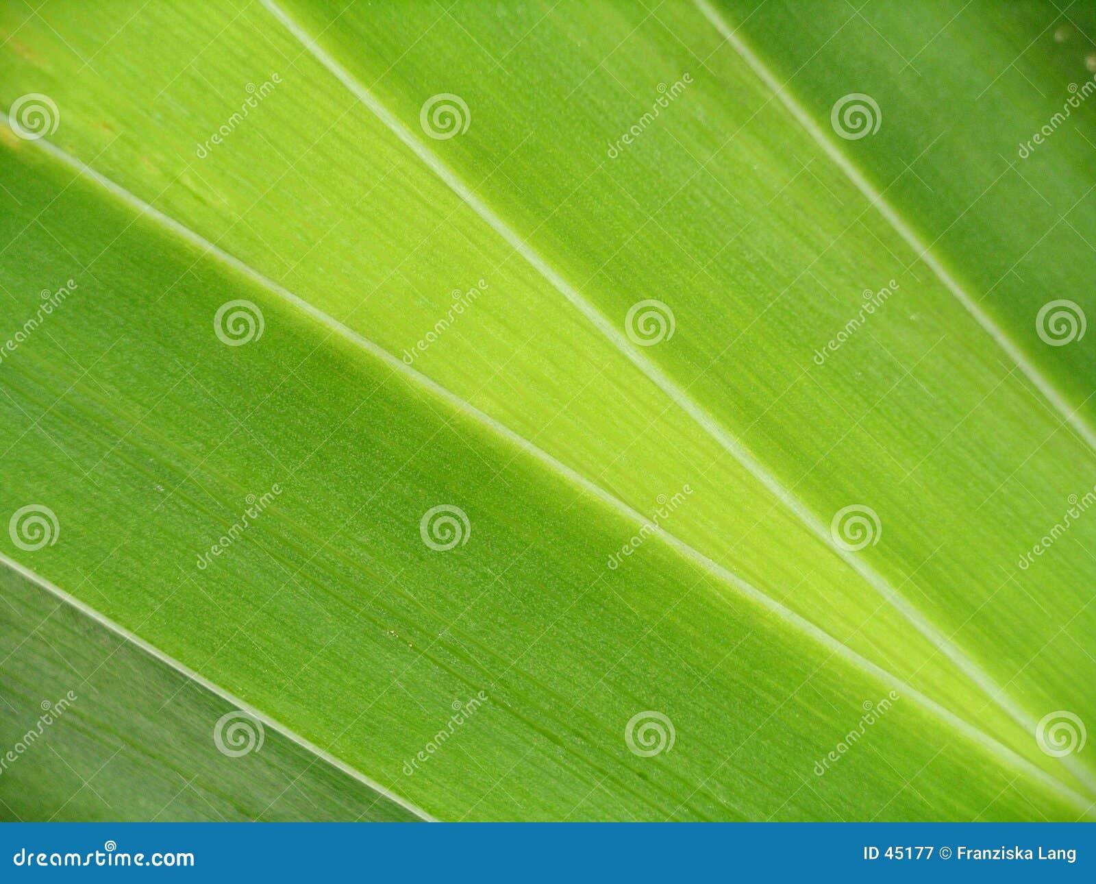 Zielone liście zbliżenie