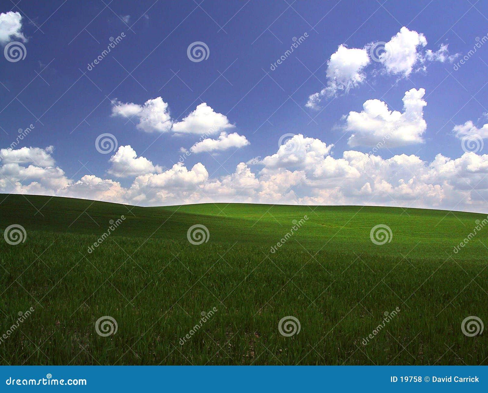 Zielone pola