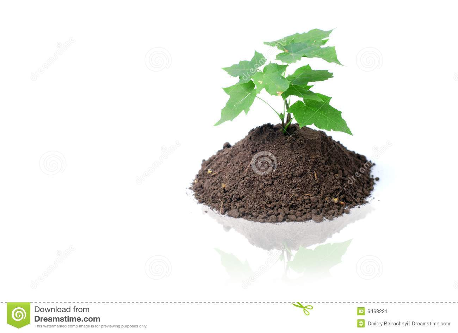 Zielone sprout ziemi