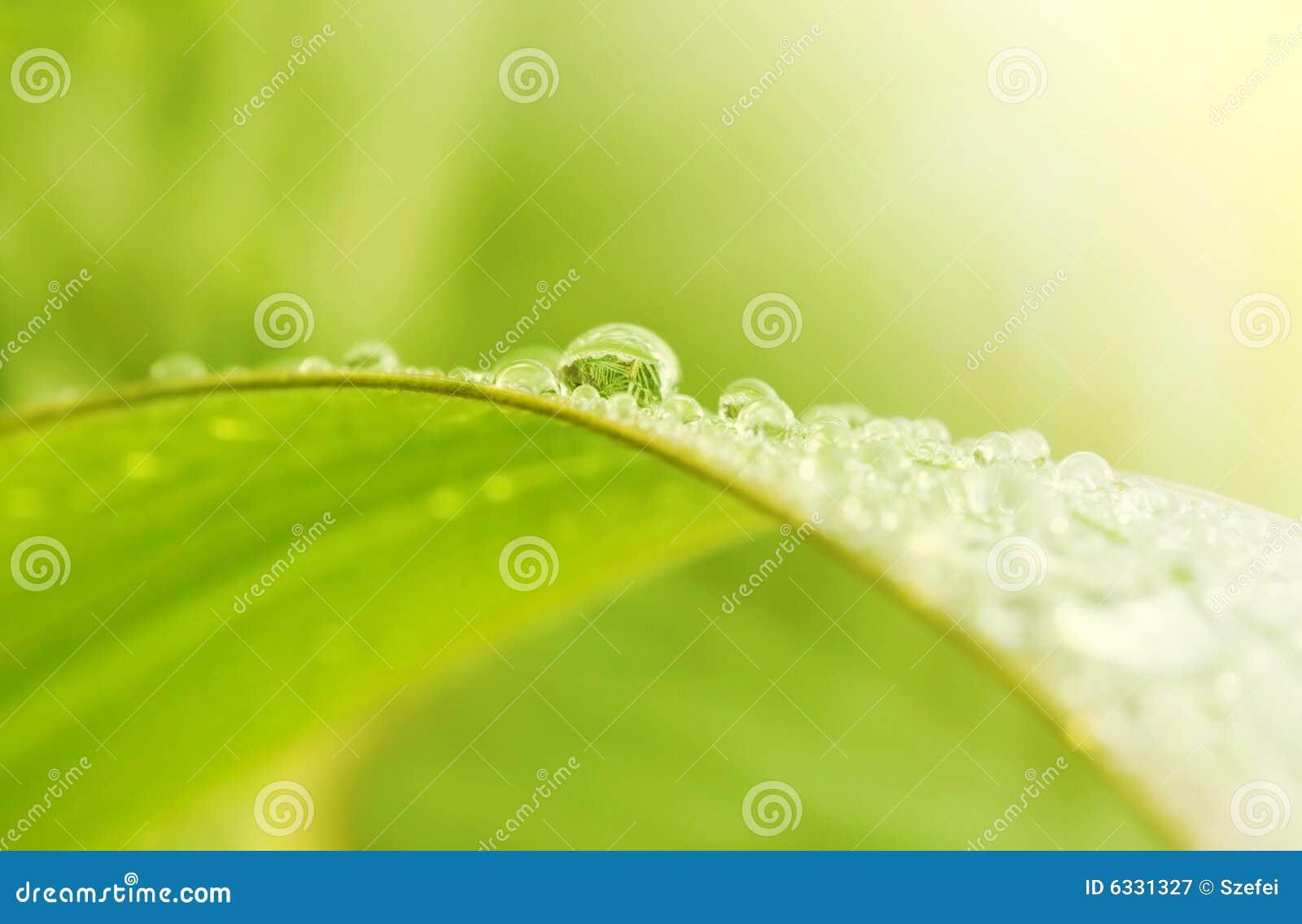 Zielone trawy #