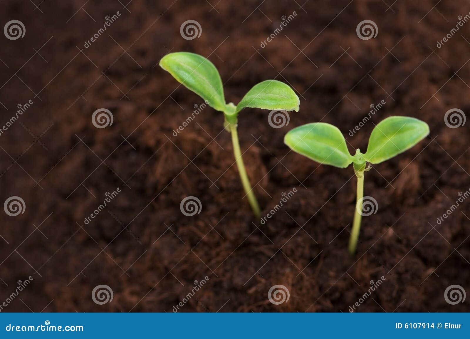 Zielone uprawy sadzonek 2