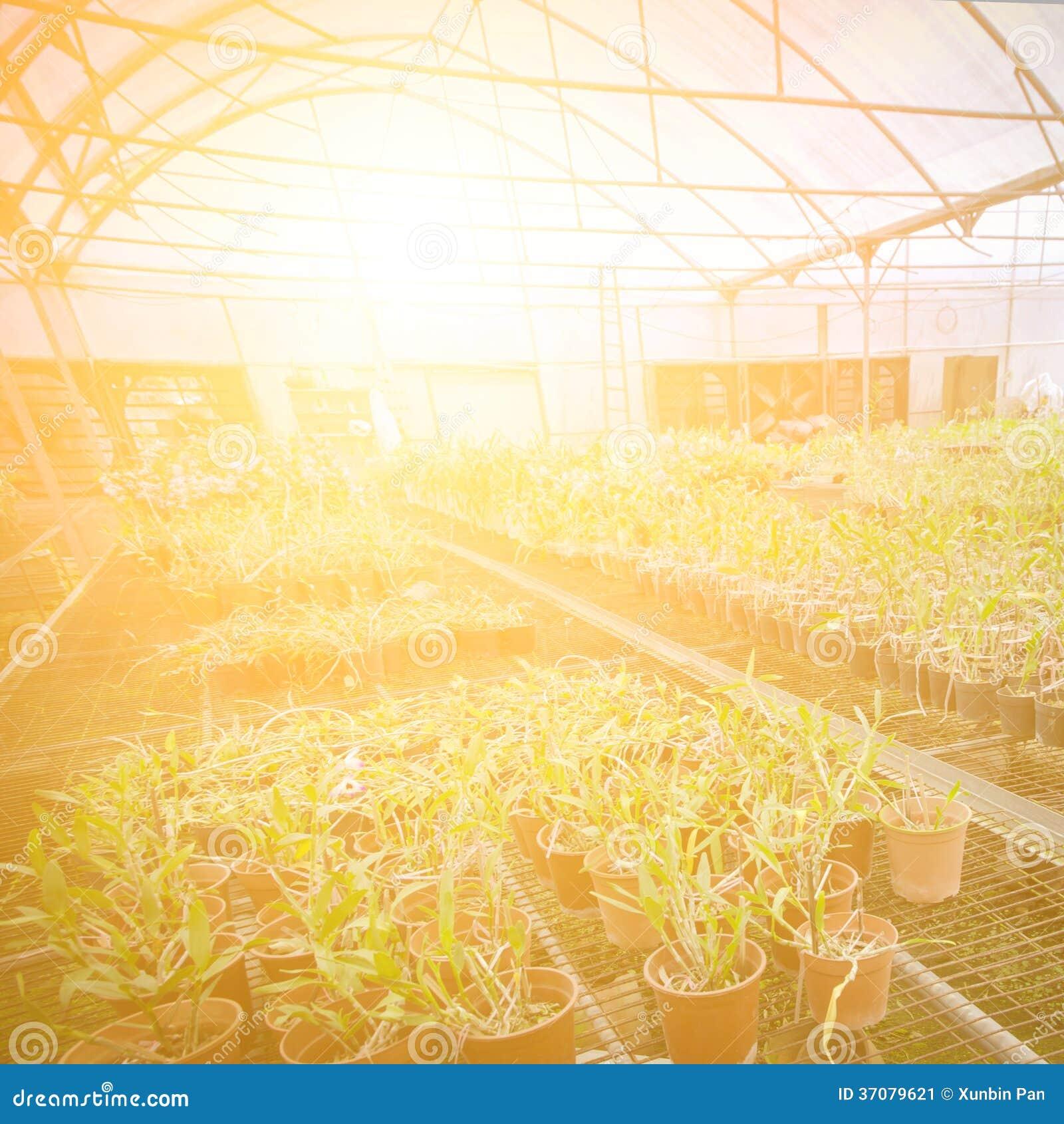 Download Zielonego Domu Kwiatu Storczykowa Pepiniera Obraz Stock - Obraz złożonej z piękny, farm: 37079621