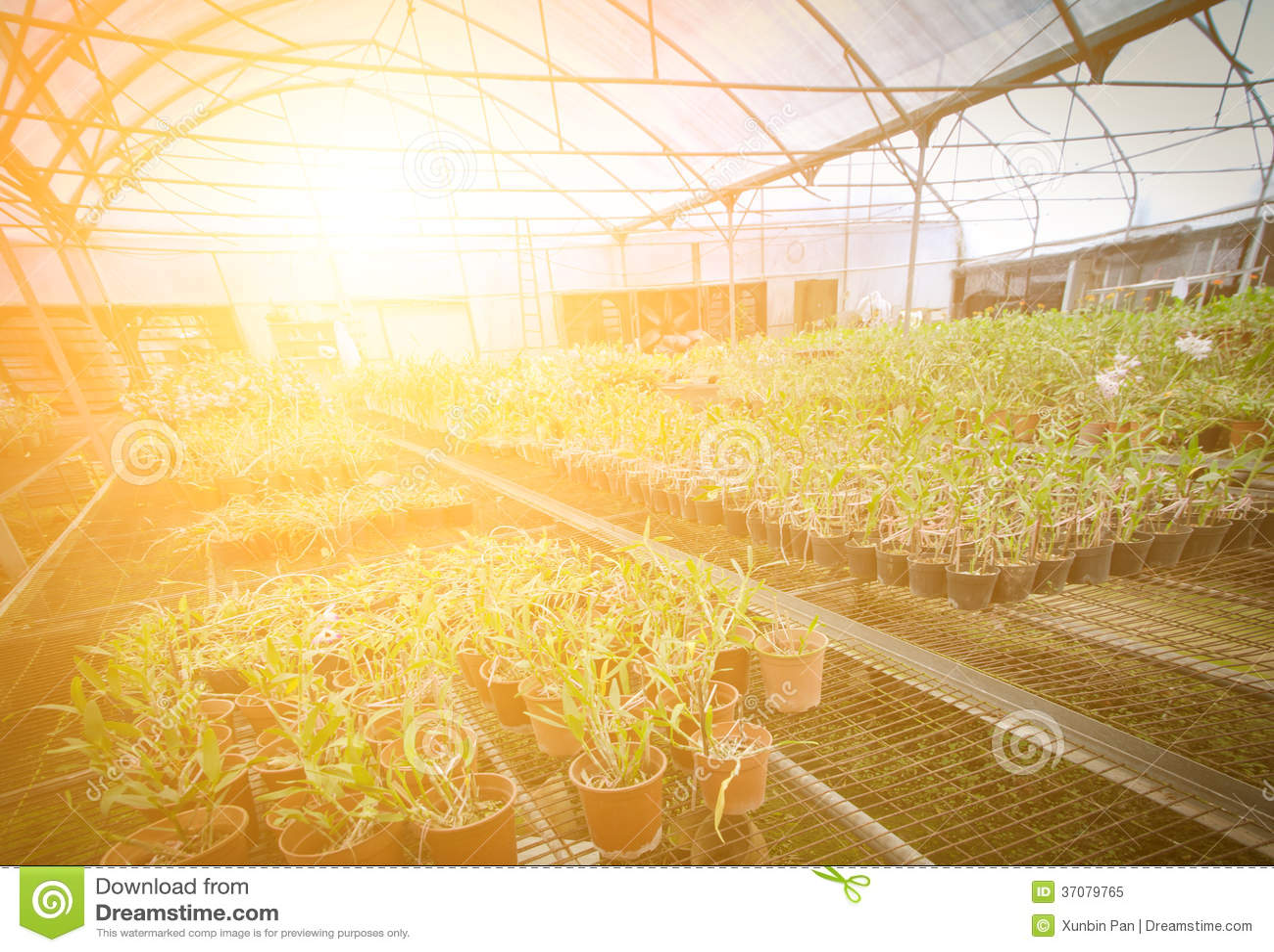 Download Zielonego Domu Kwiatu Storczykowa Pepiniera Obraz Stock - Obraz złożonej z botaniczny, 1: 37079765