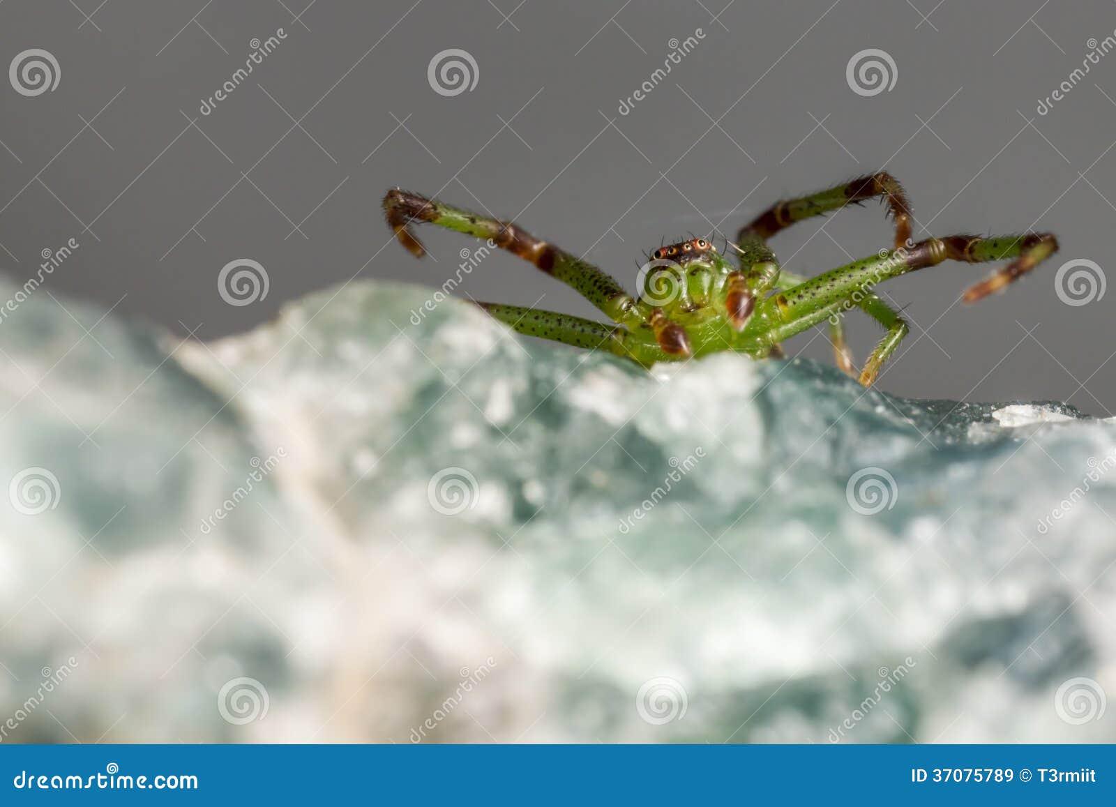 Download Zielonego Kraba Pająk, Diaea Dorsata Obraz Stock - Obraz złożonej z cięcie, zbliżenie: 37075789