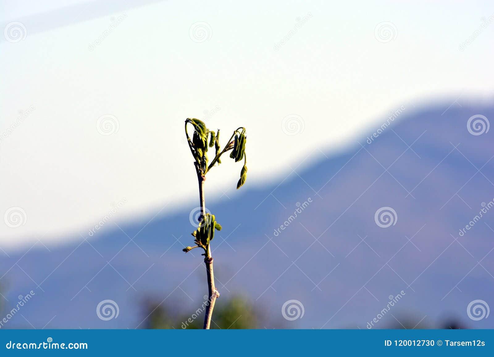 Zielonej rośliny ` s gałąź