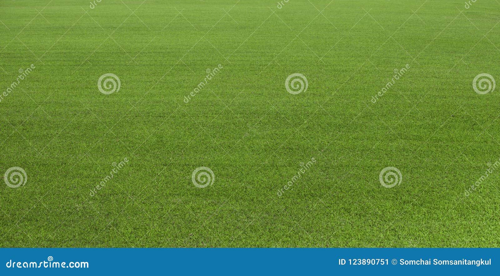 Zielonej trawy pole, zielony gazon Zielona trawa dla pola golfowego, piłka nożna, futbol, sport Zielona murawy trawy tekstura i t