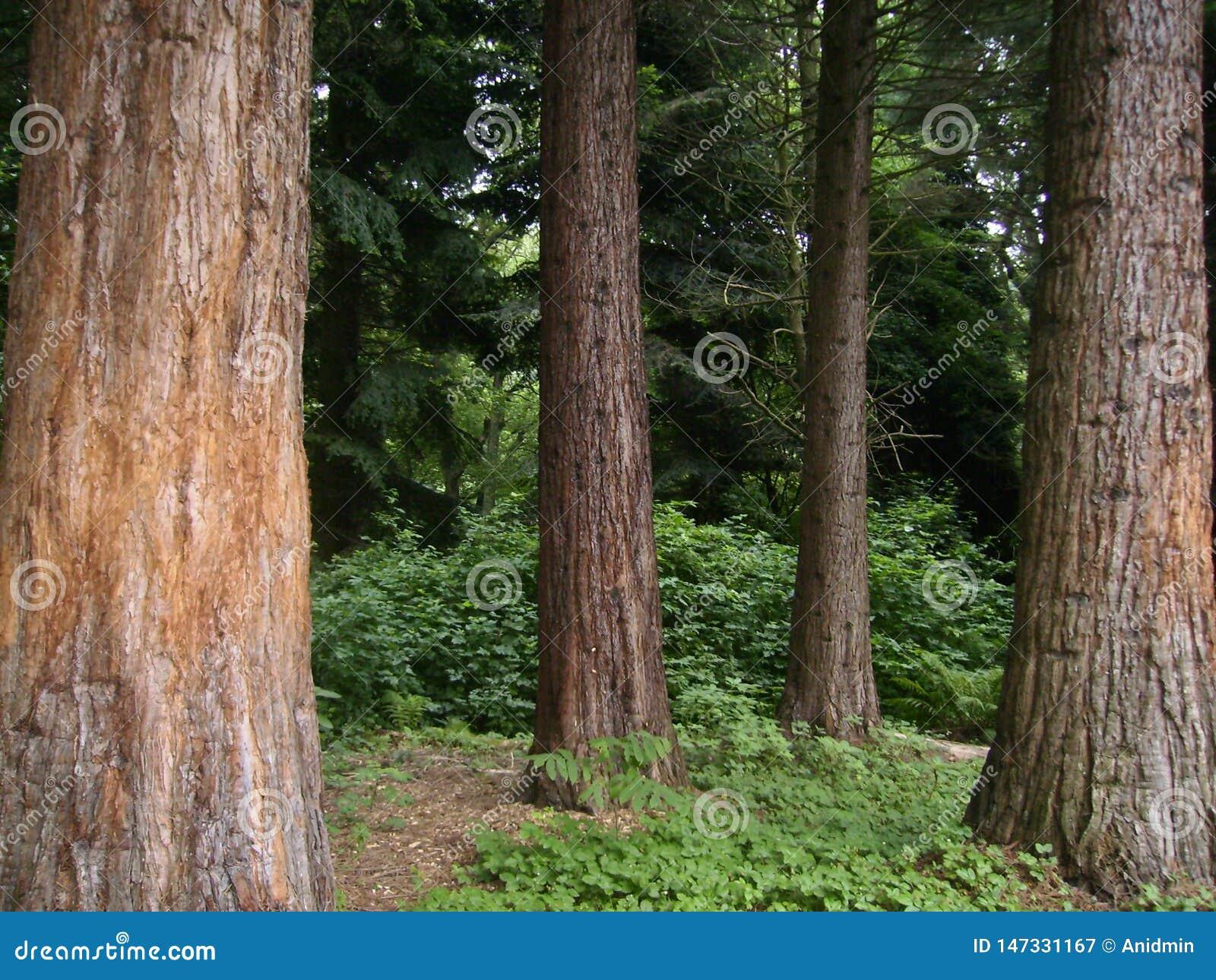 Zielony ciemny las na lecie Bochum, NRW, Niemcy
