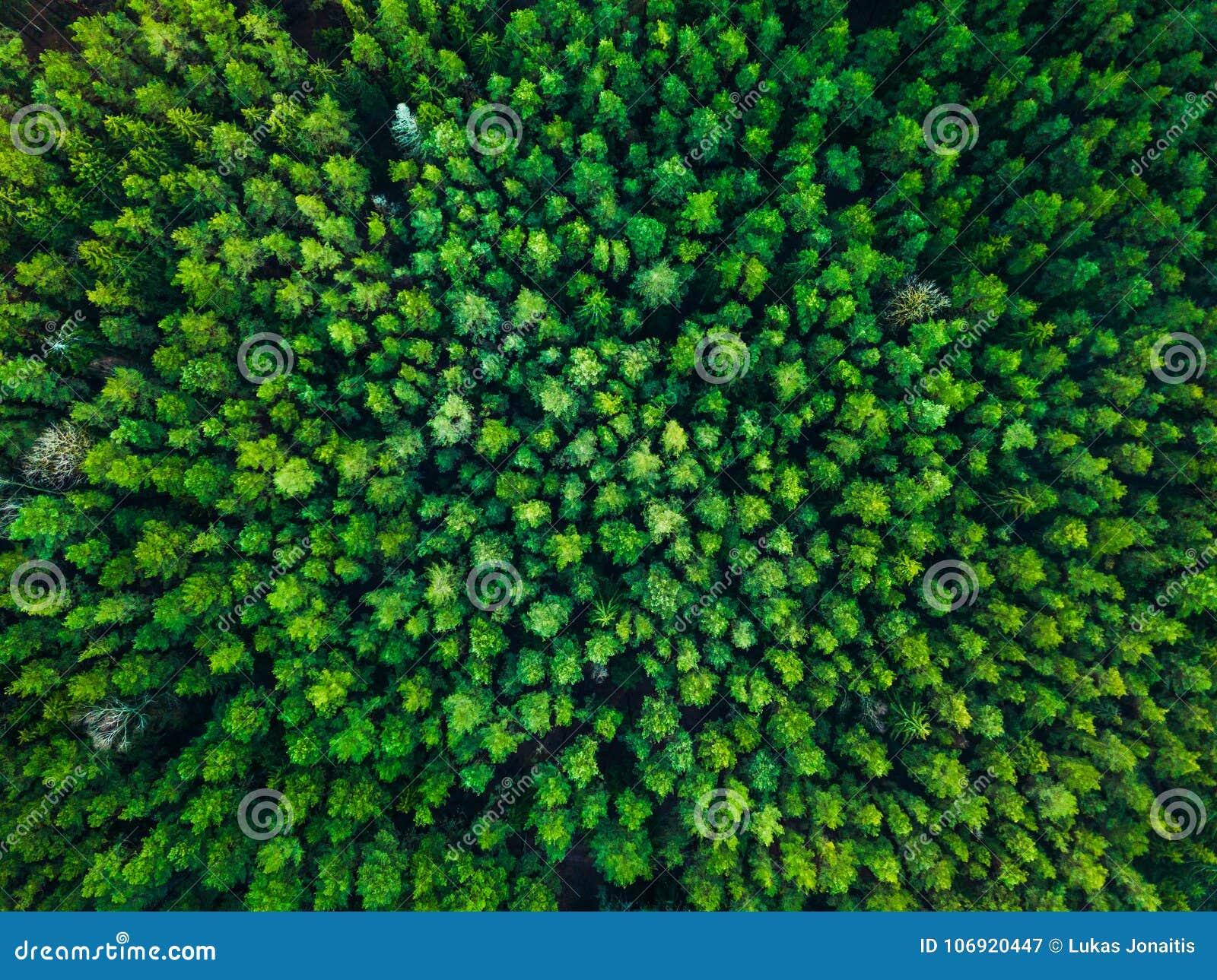 Zielony drzewa tło w Lithuania, Europa