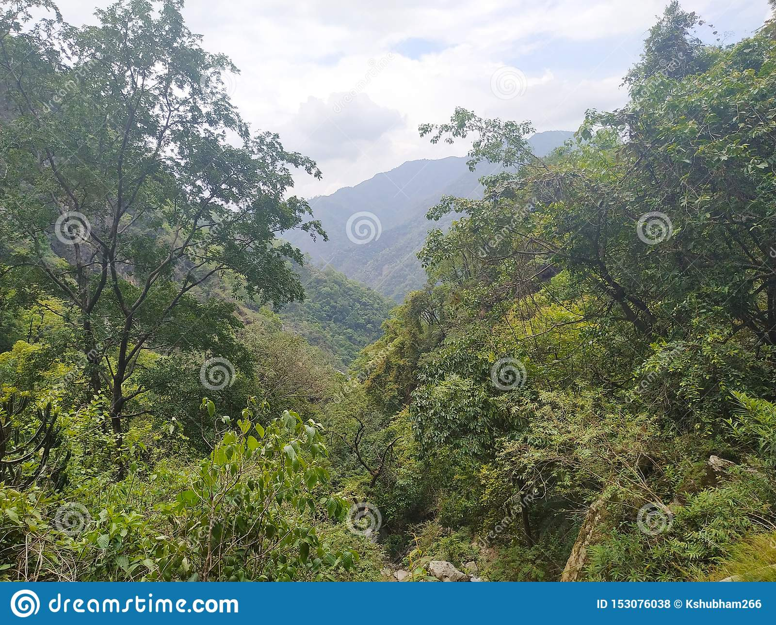 Zielony drzewo na odgórnym wzgórzu i tło góra jesteśmy wspaniali