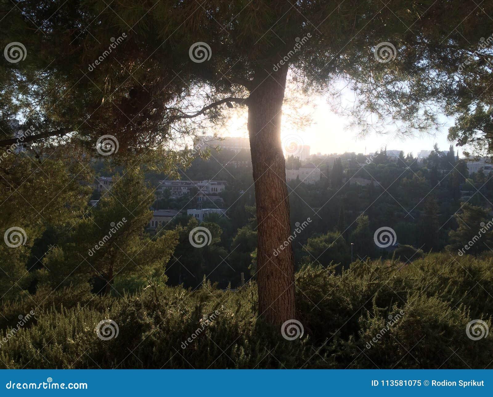 Zielony drzewo w wieczór