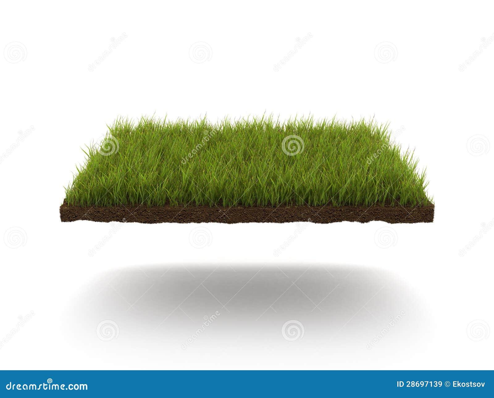 Zielony gazon