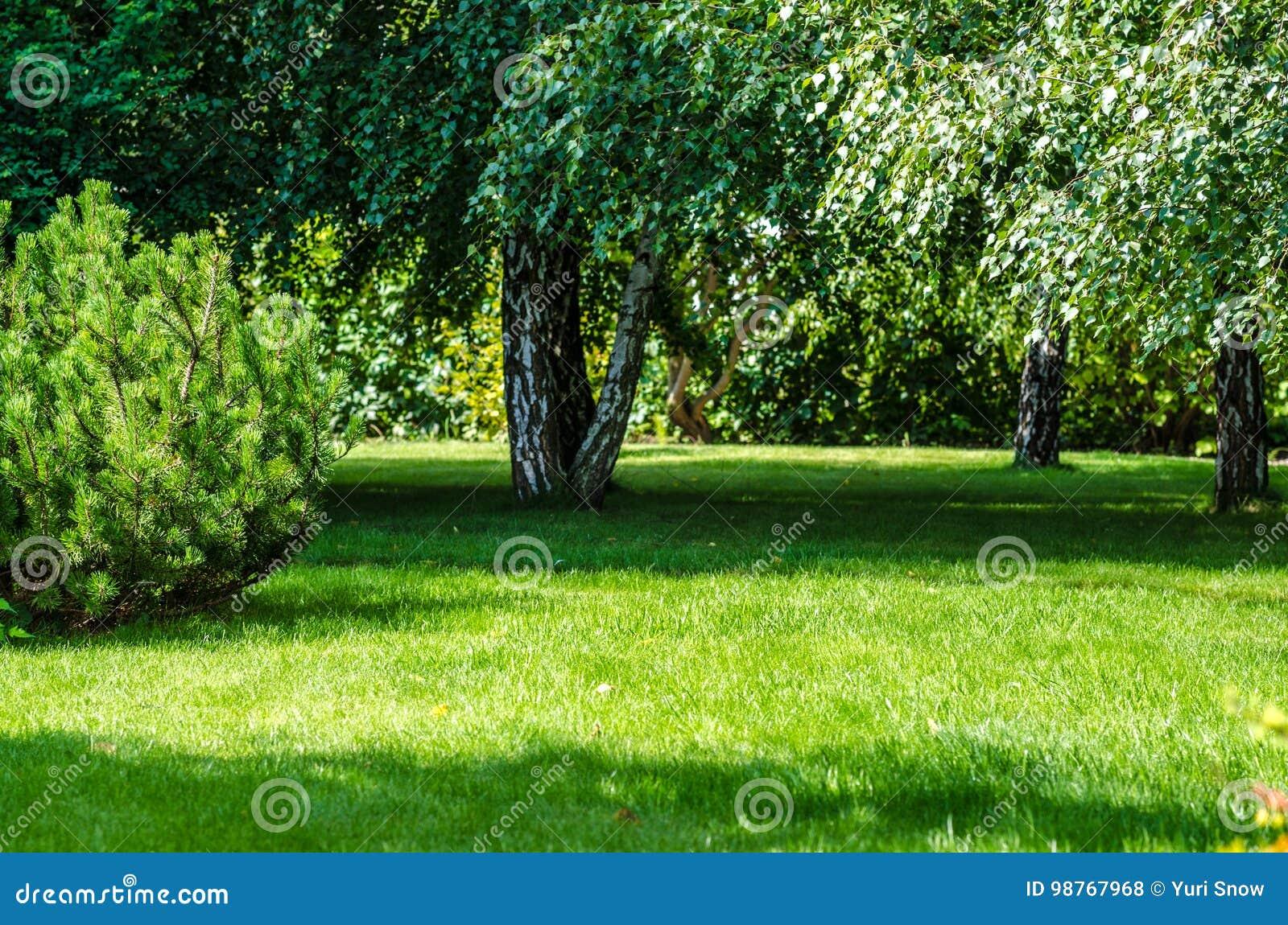 Zielony gazonu ogródu podwórze