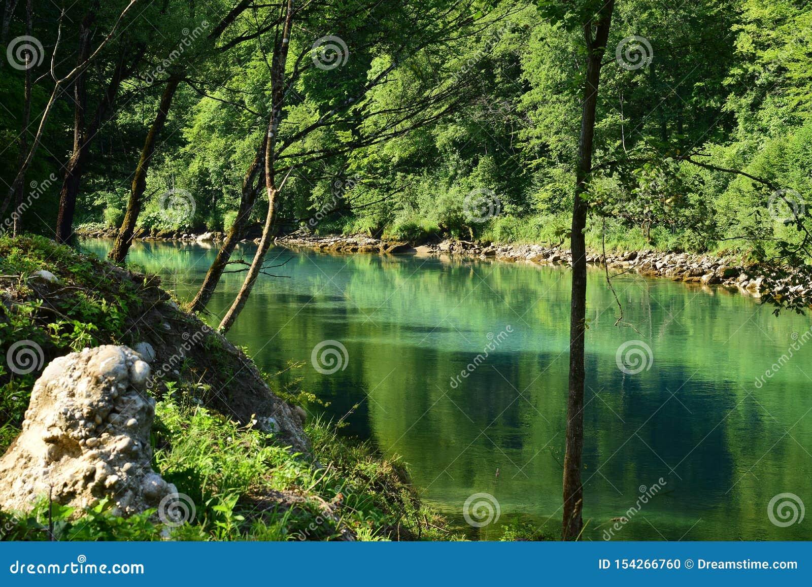 Zielony halny rzeczny Drina z otaczającymi drzewami