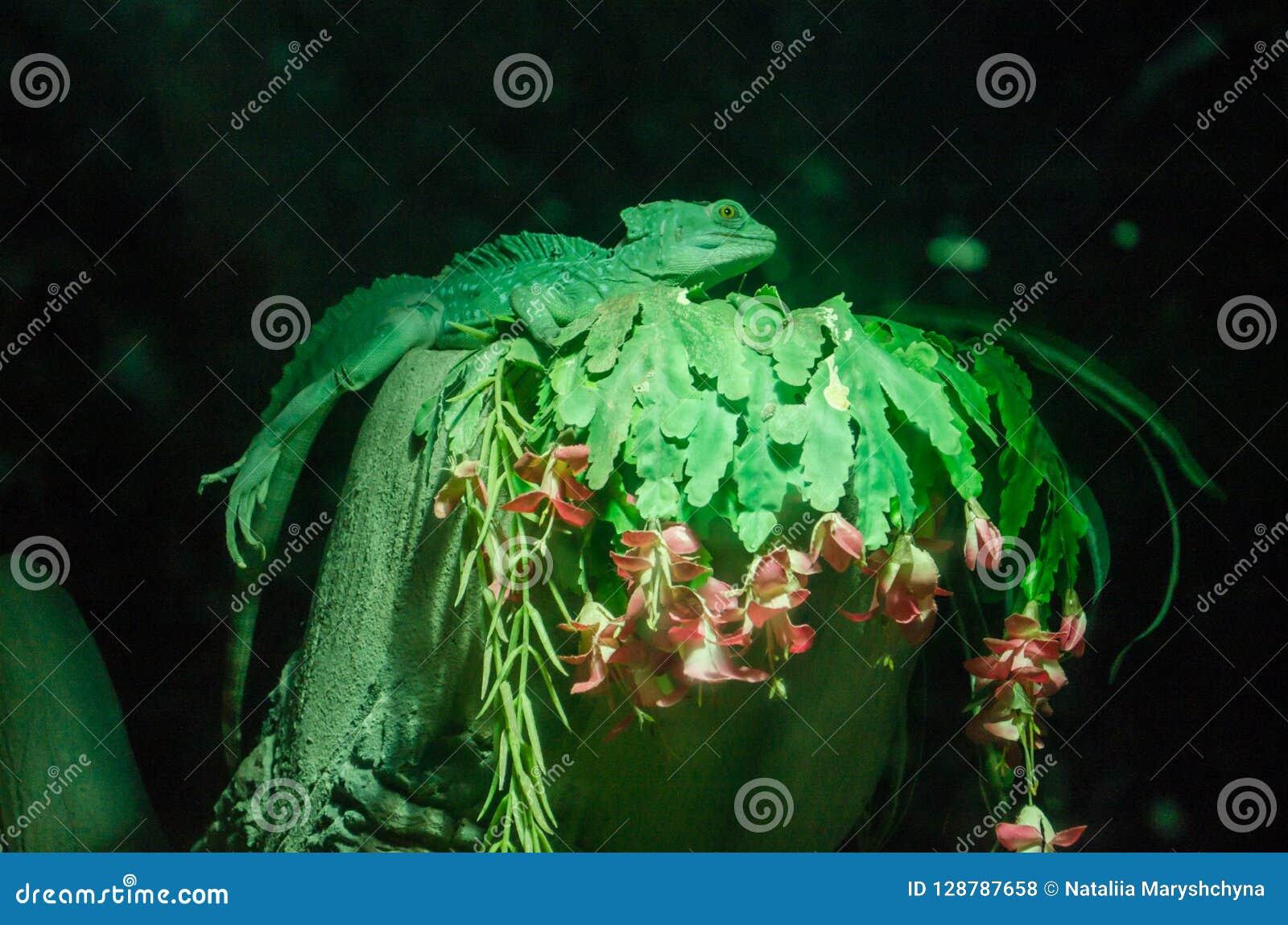 Zielony kameleonu przebranie na zielonej gałąź