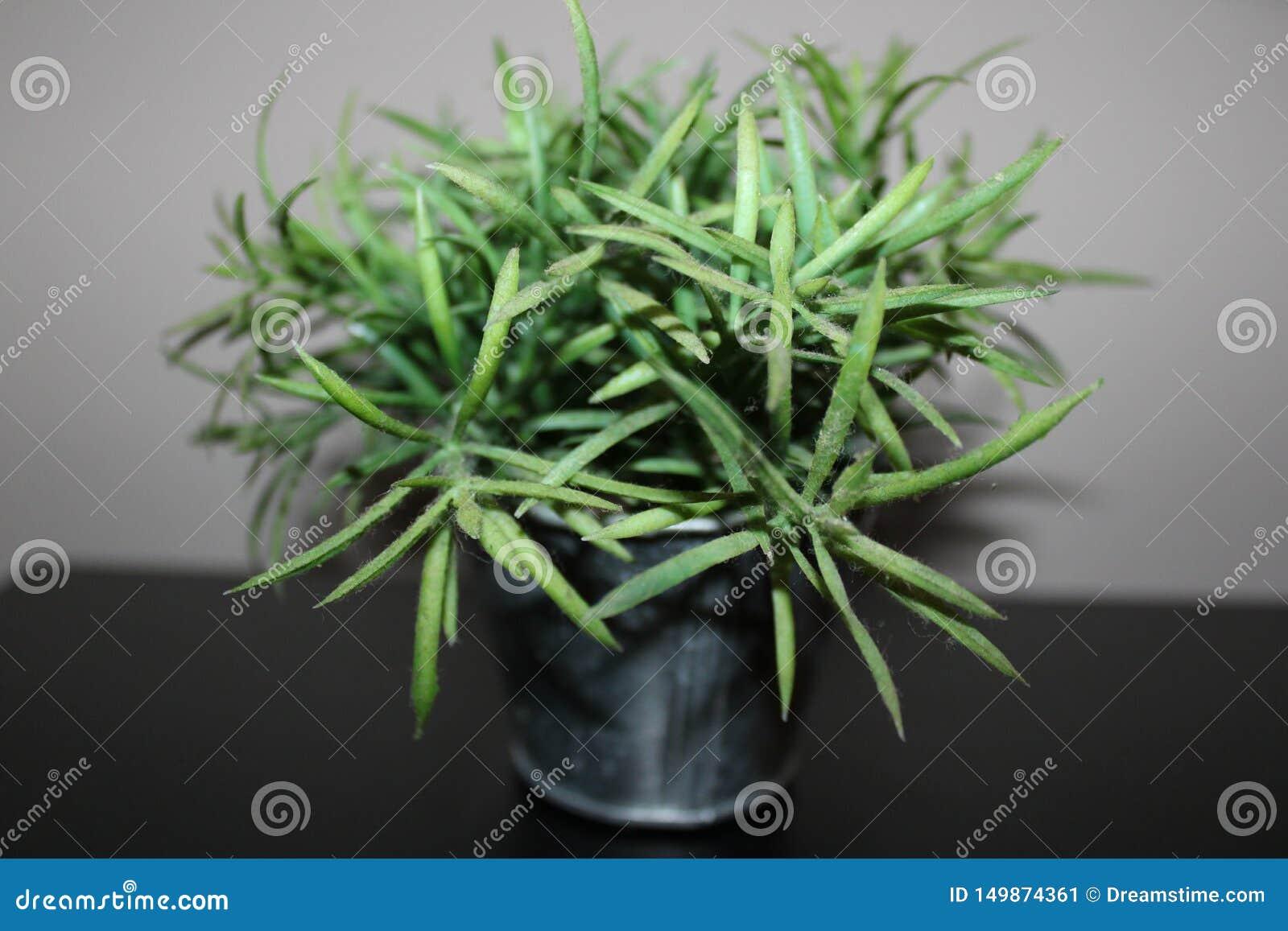 Zielony klingeryt kwitnie w mi bethroom