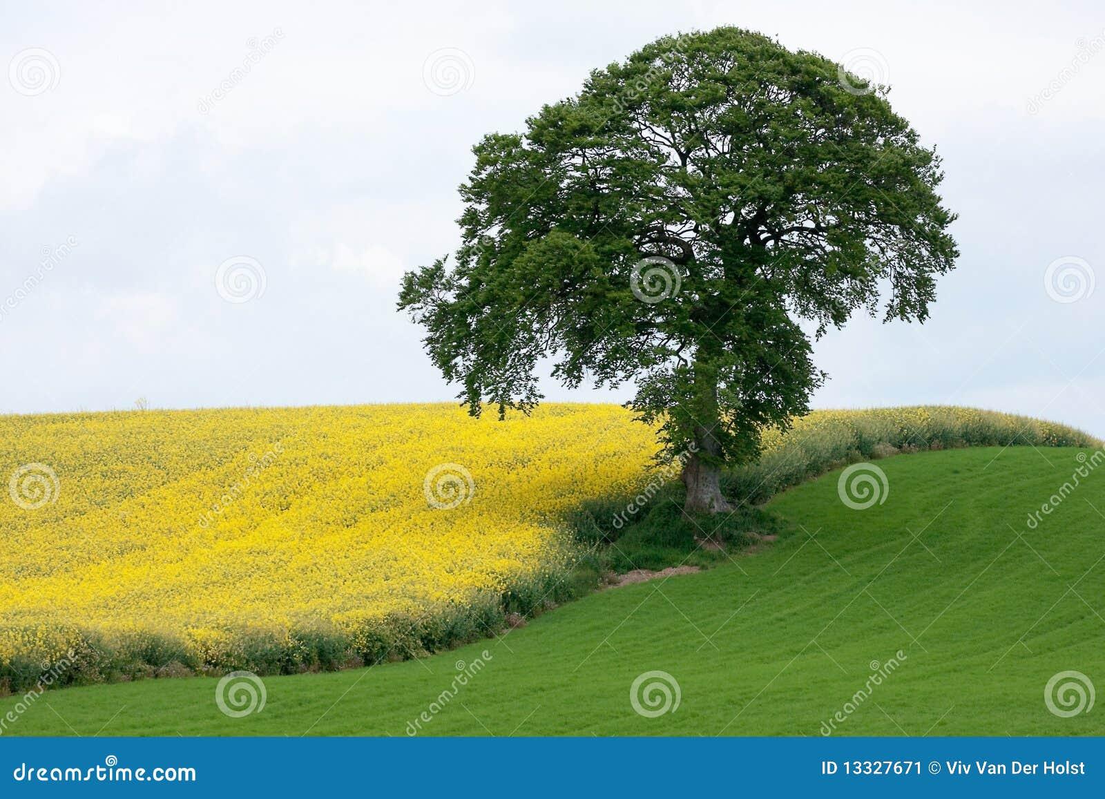 Zielony kolor żółty