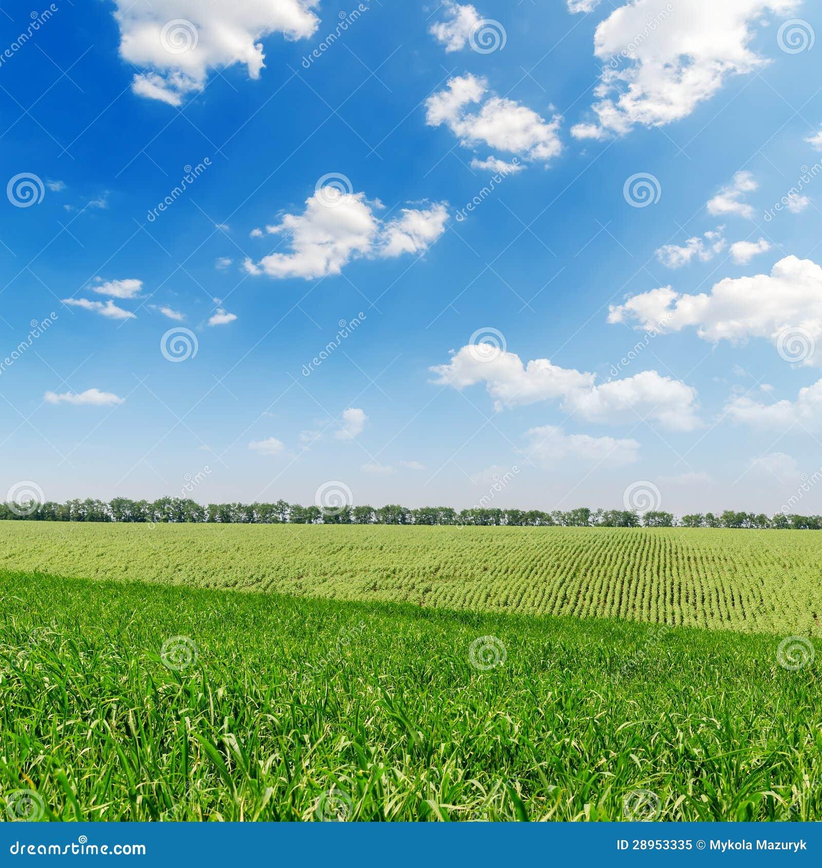 Zielony krajobraz i niebo