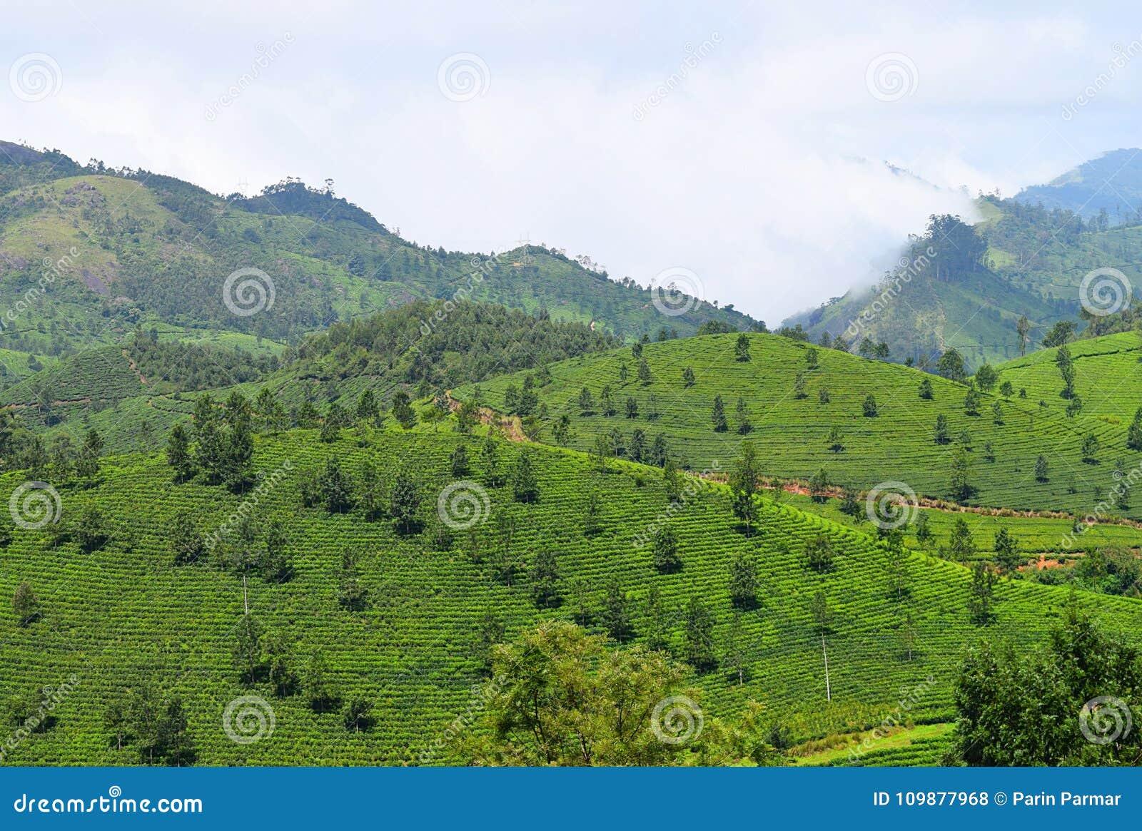 Zielony krajobraz w Munnar, Idukki, Kerala, India - Naturalny tło z górami i Herbacianymi ogródami