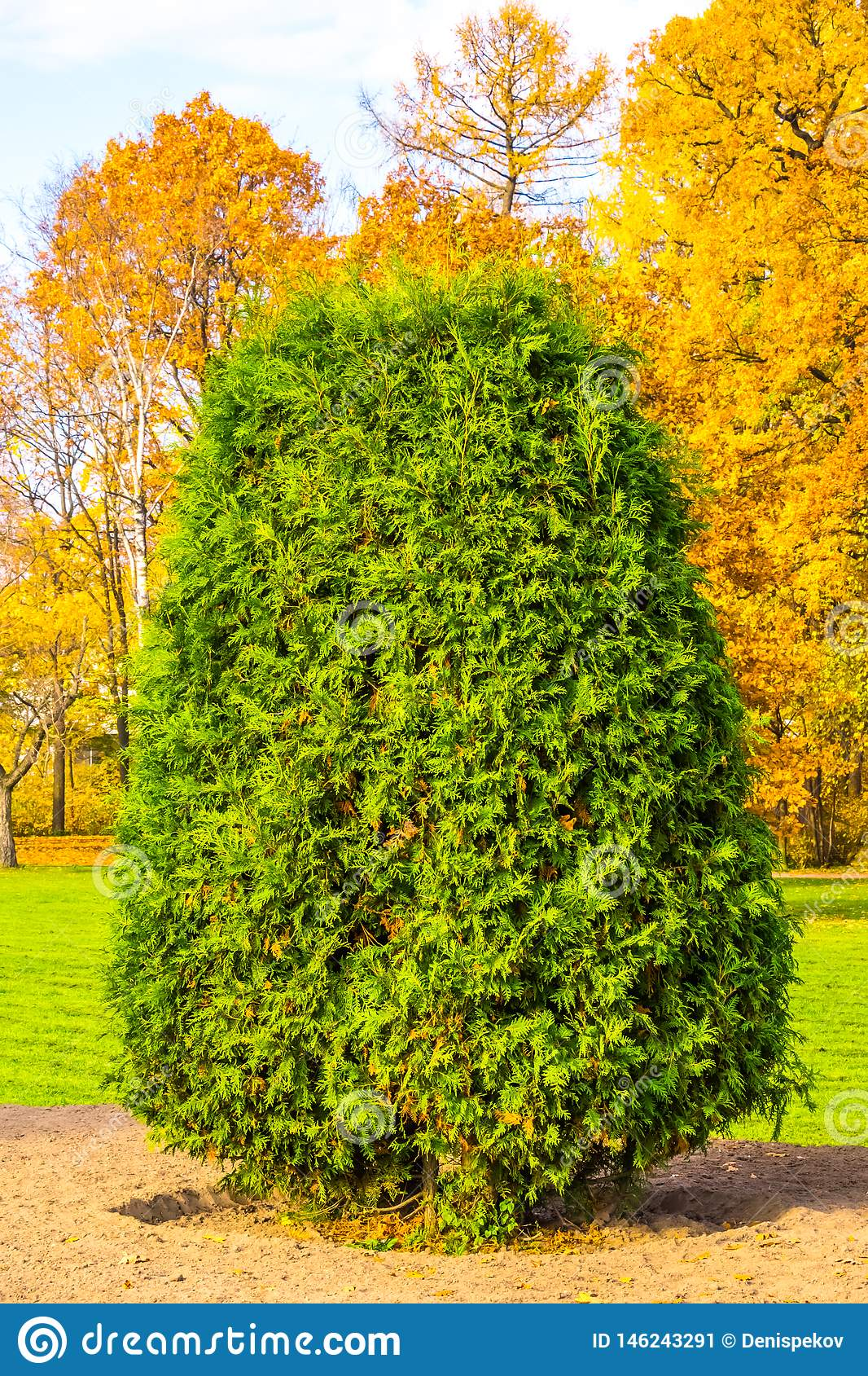 Zielony krzak
