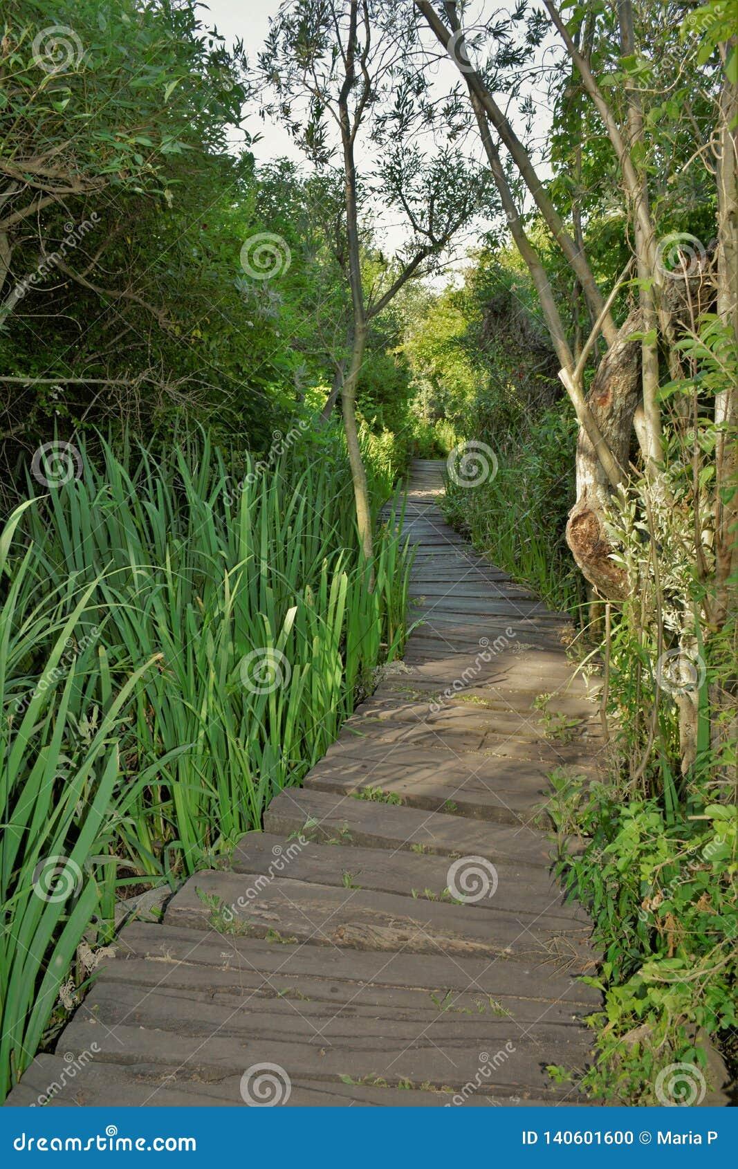 Zielony lasu ogródu ścieżki natury treesd tło