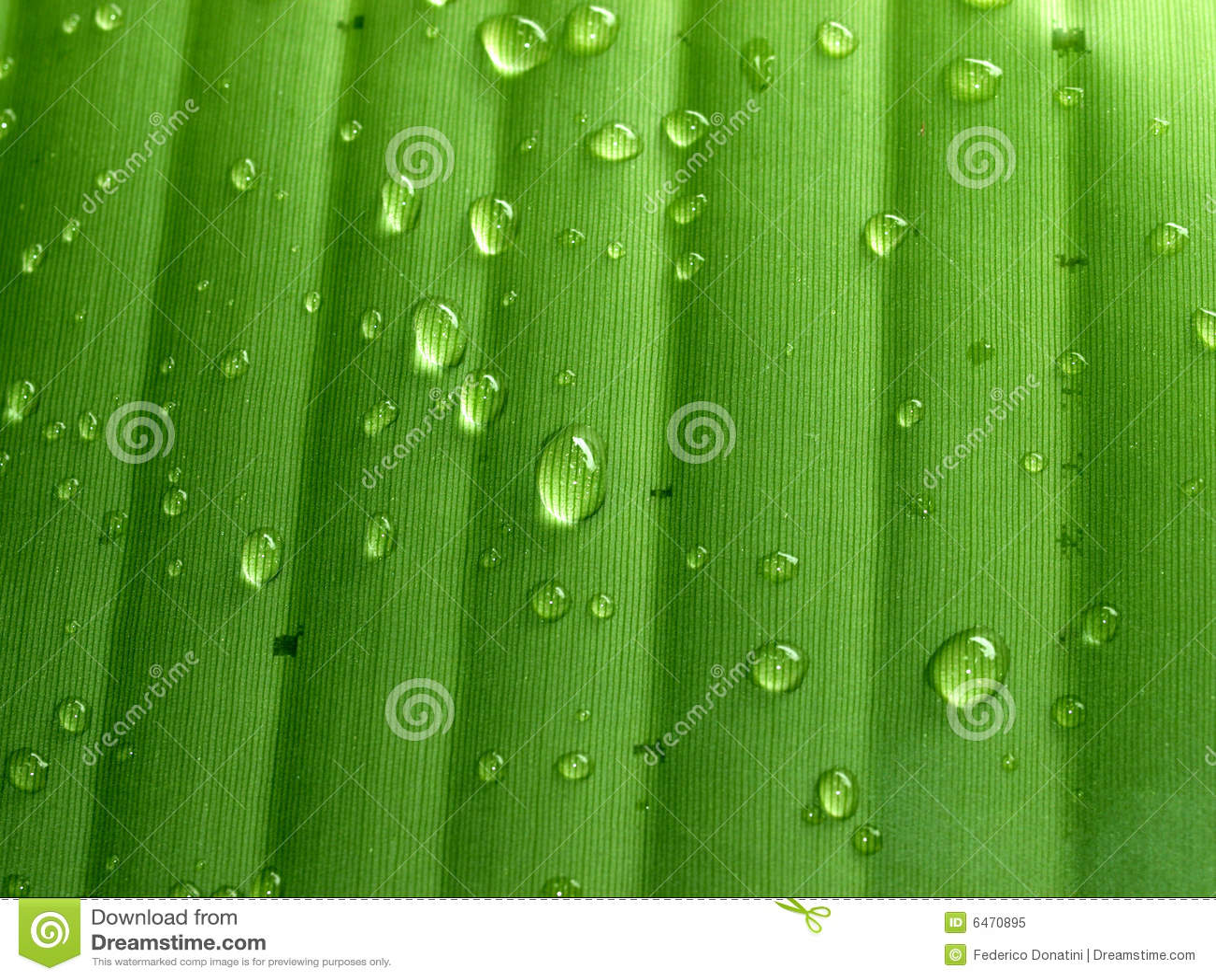 Zielony liść banana
