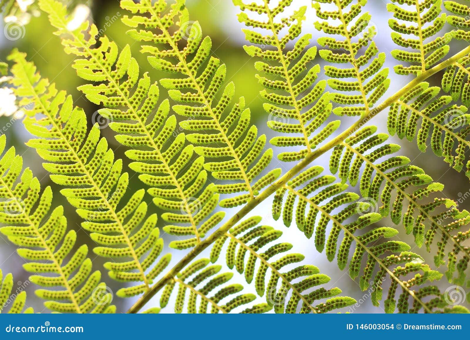 Zielony liścia drzewo chłodno
