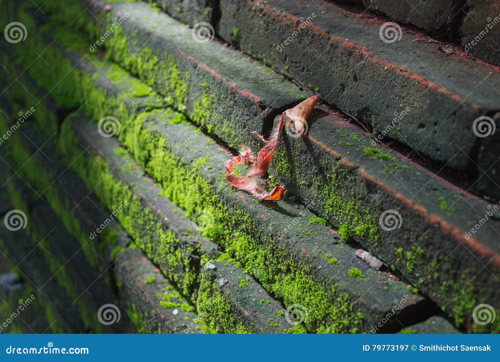 Zielony Mos na ścianie