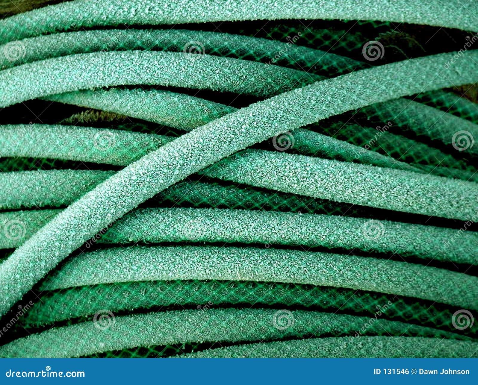 Zielony ogród wąż