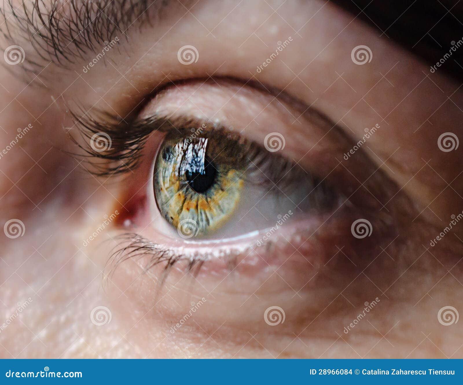 Zielony oko w świetle