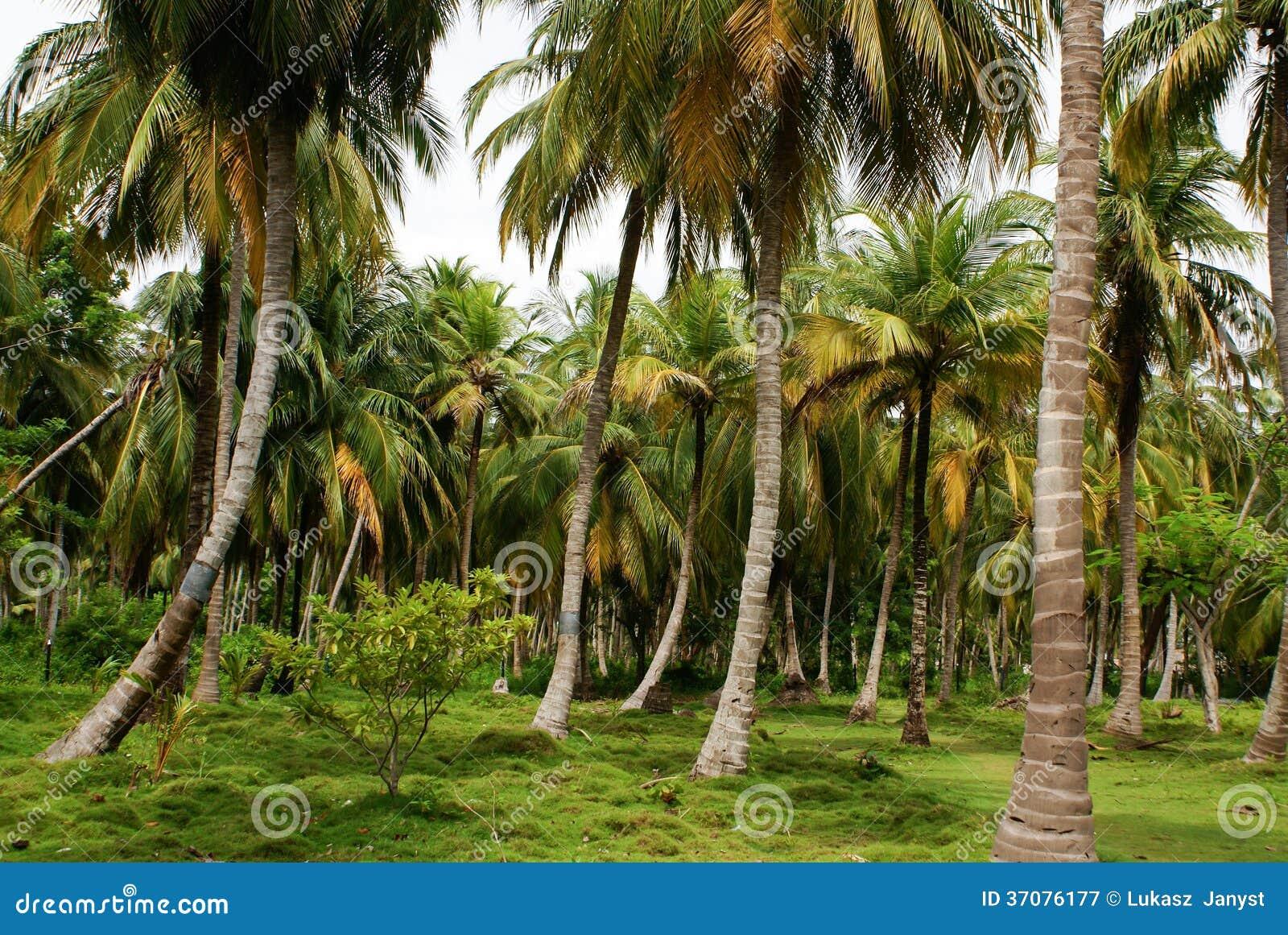 Download Zielony Palmowy Las W Kolumbijskiej Wyspie Mucura Obraz Stock - Obraz złożonej z idylliczny, kolor: 37076177