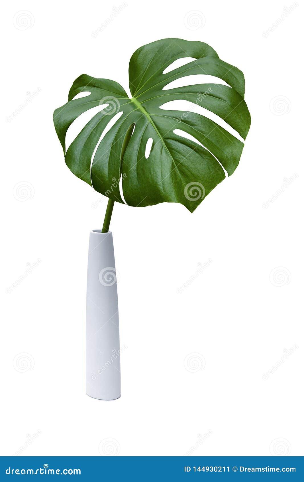 Zielony palmowy liść na białym tle