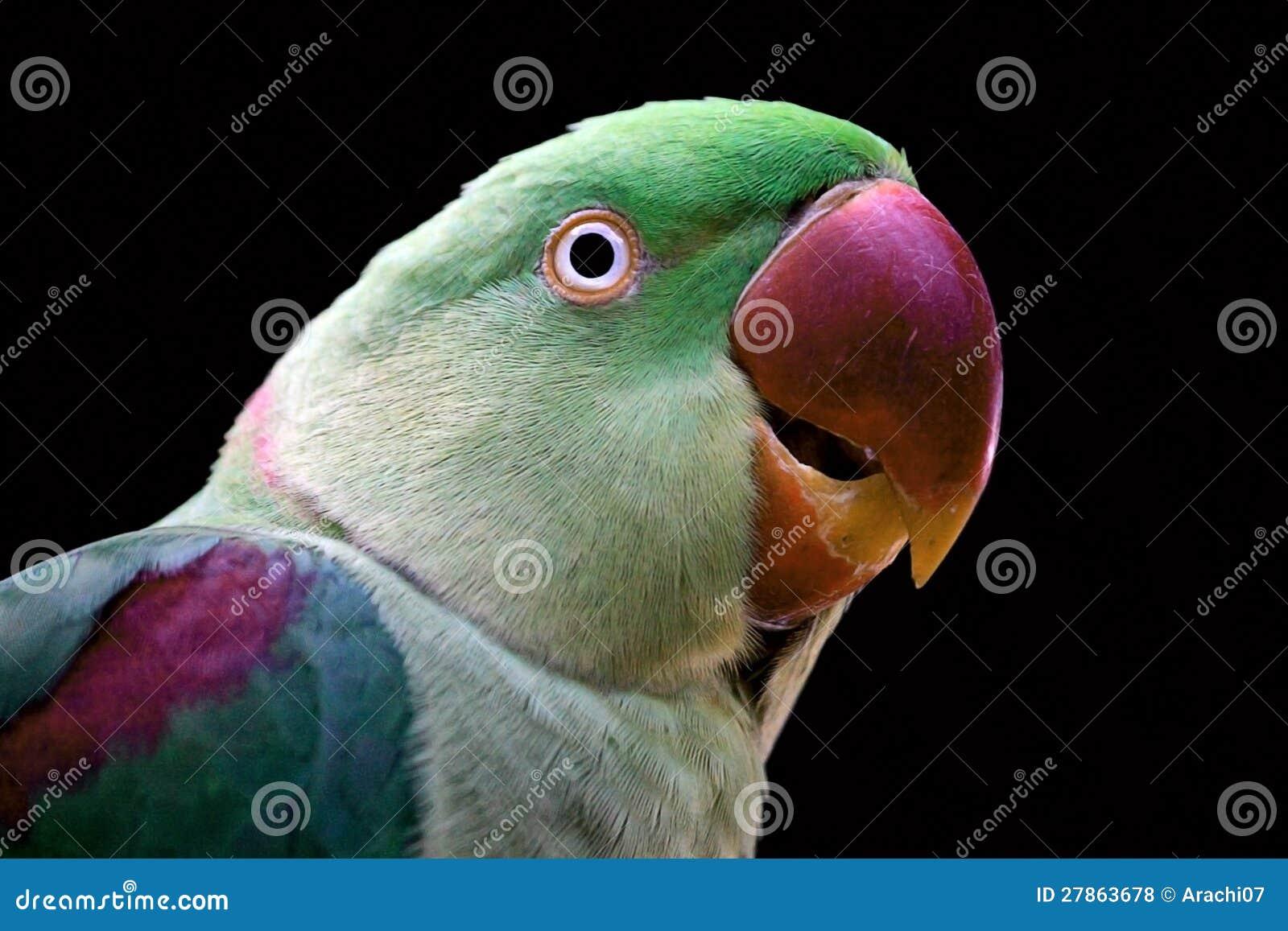 Zielony Parrot-1
