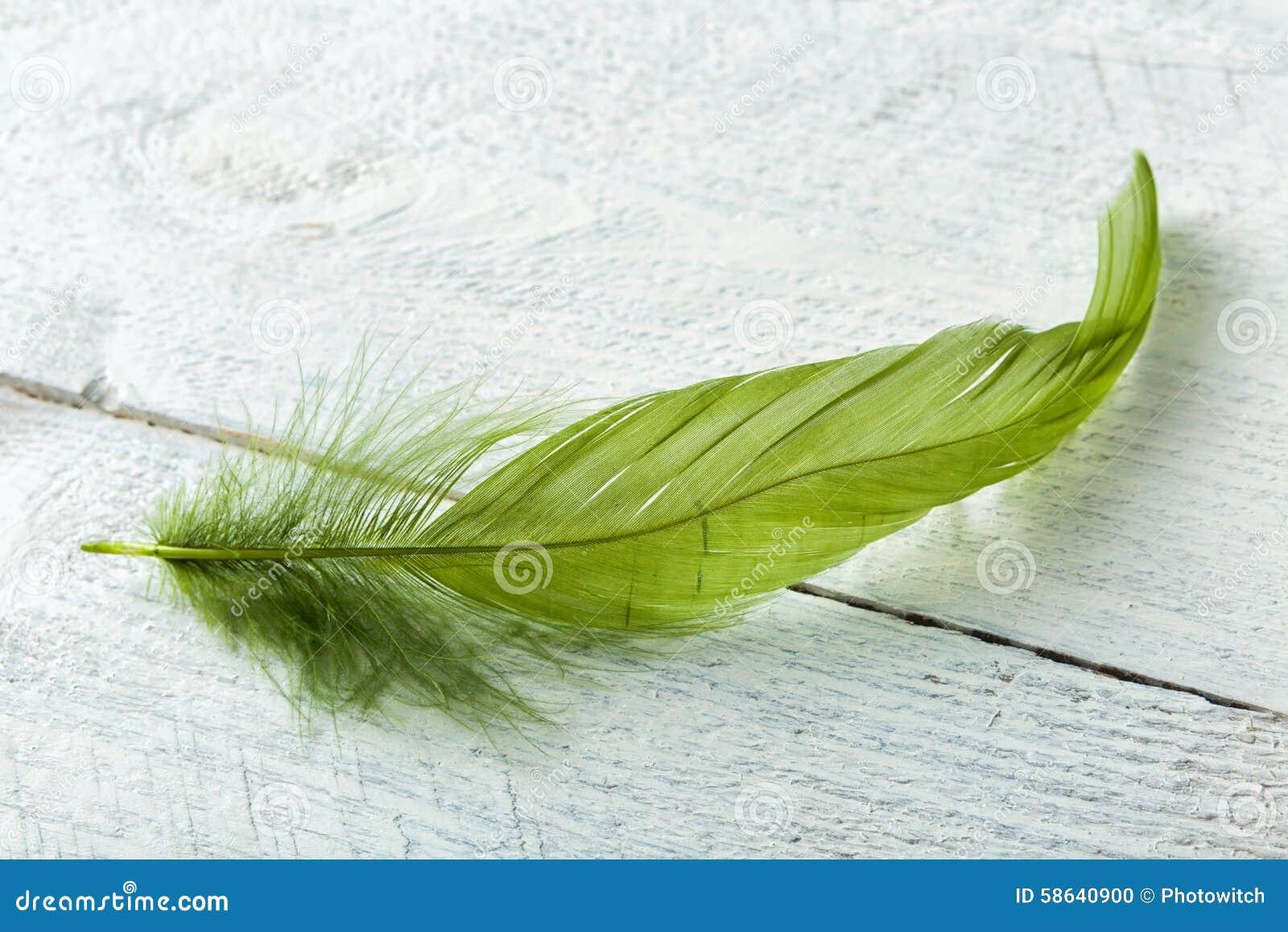 Zielony piórko na nieociosanym drewnie