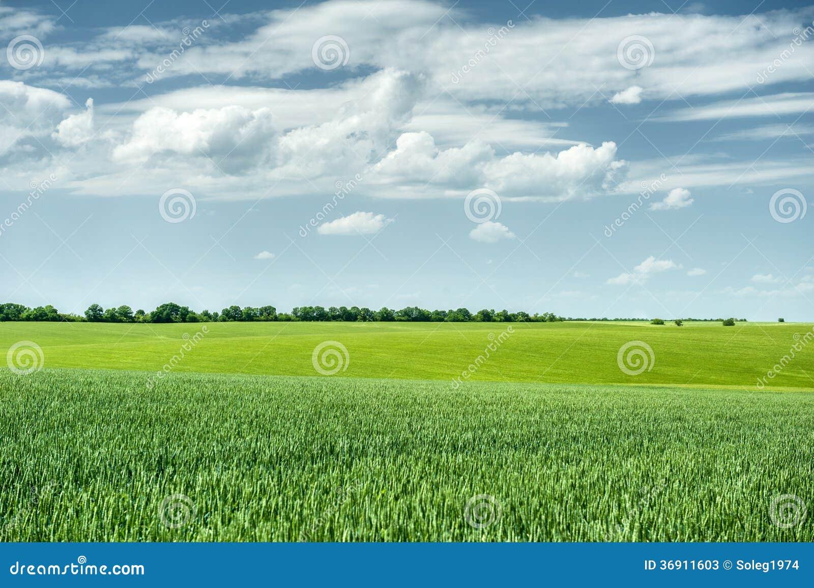Zielony pola i niebieskie niebo wiosny krajobraz