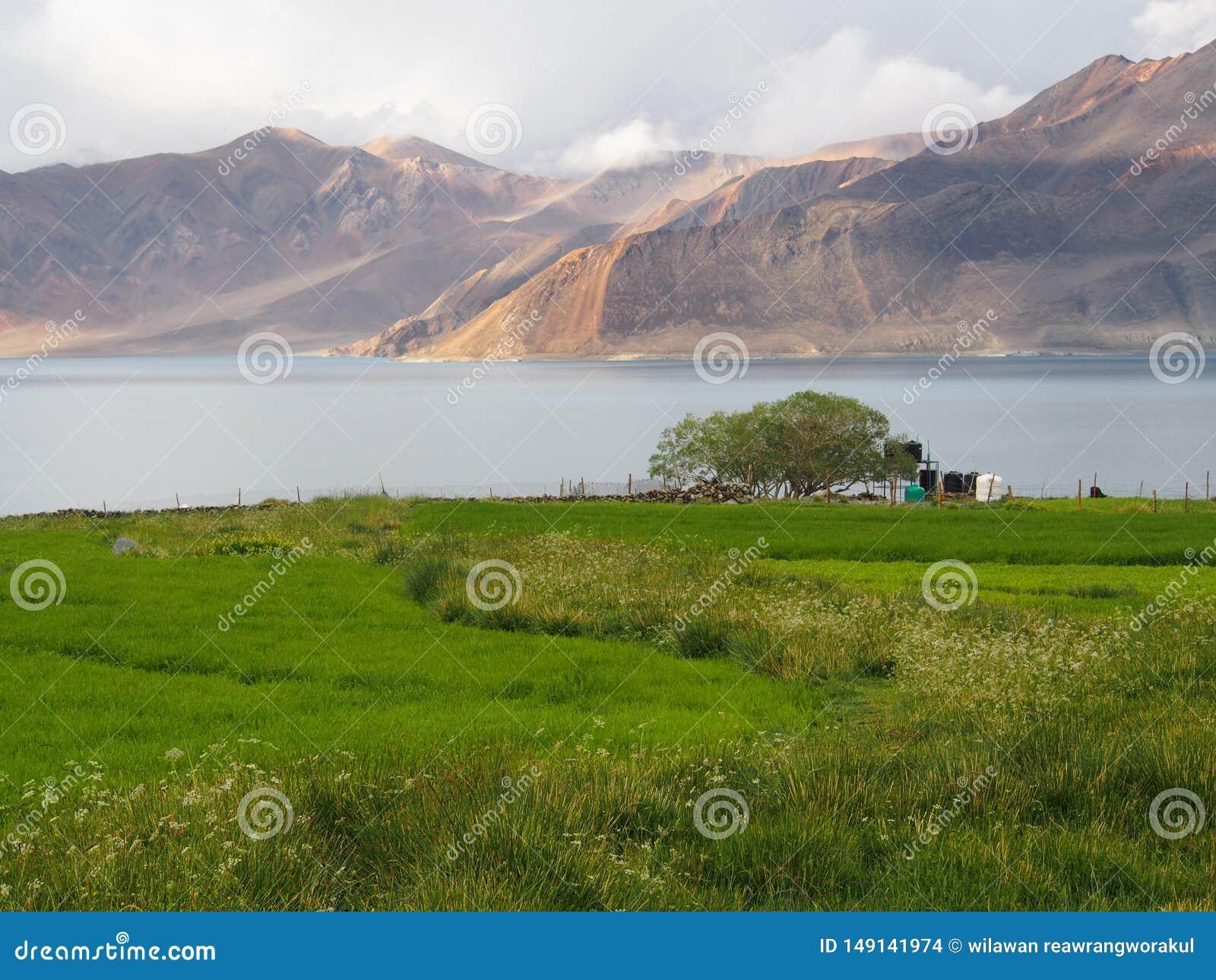 Zielony pole po Podeszczowego jeziora i g?ry lanscape