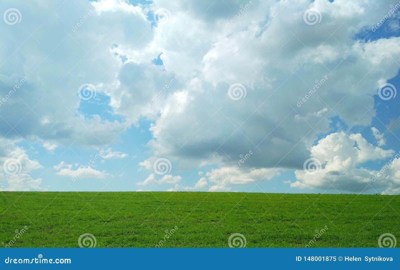 Zielony pole w wio?nie na ciep?ym chmurnym dniu