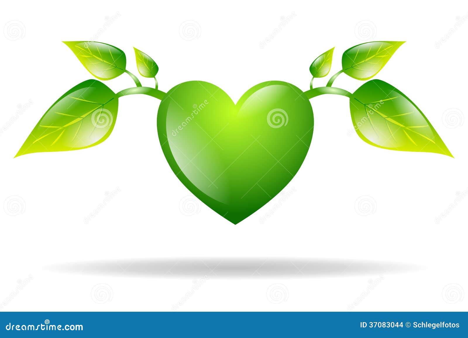 Download Zielony Serce Z Liśćmi Odizolowywającymi Ilustracji - Ilustracja złożonej z zdrowy, valentine: 37083044