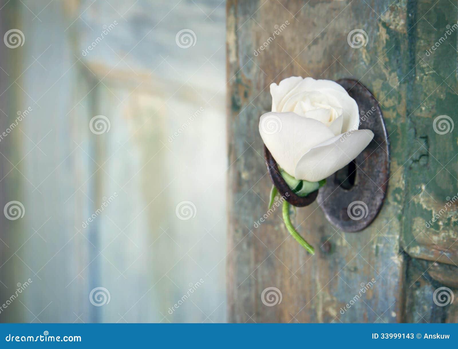 Zielony stary drewniany drzwi z białą różą