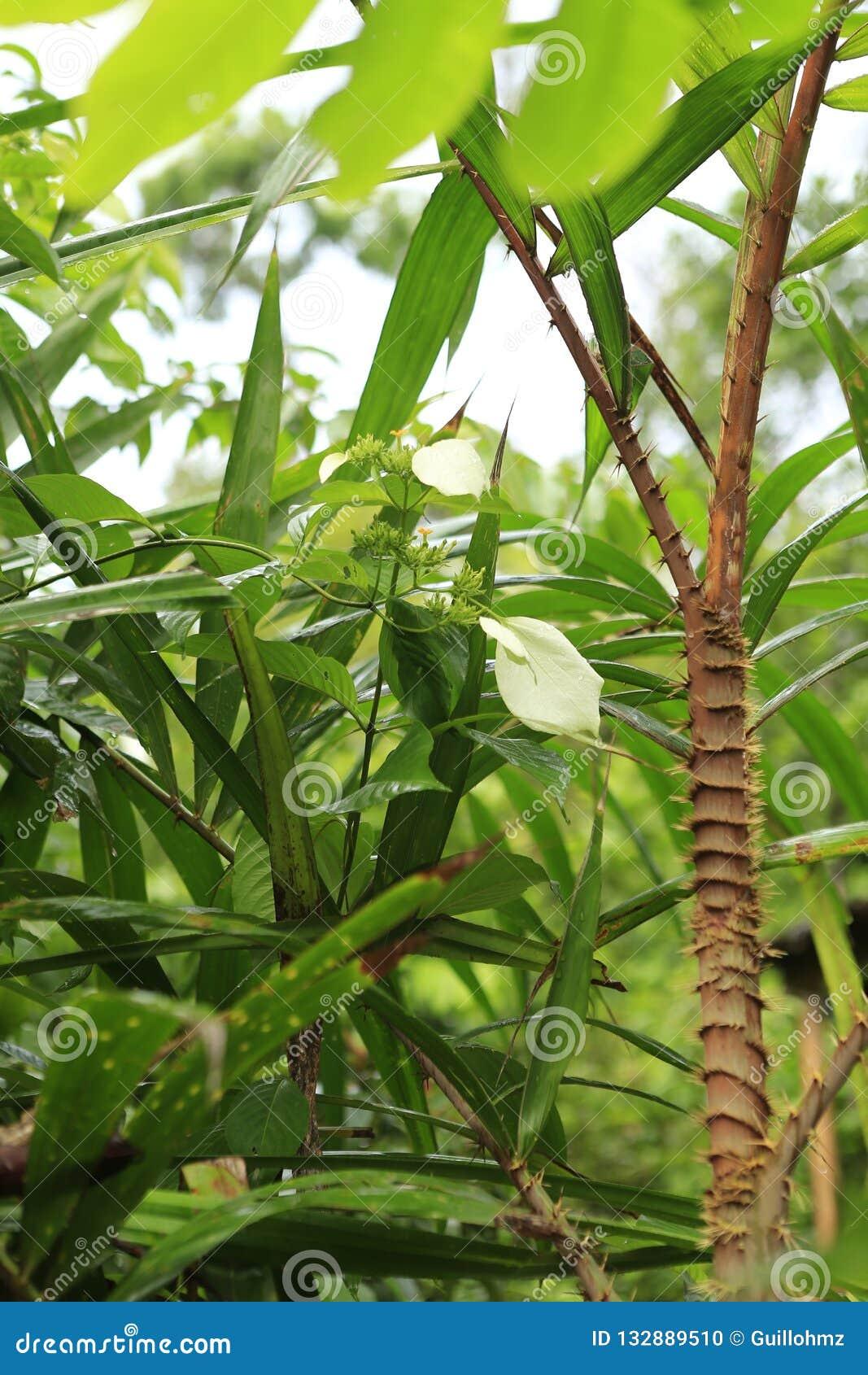 Zielony urlop w dżungli