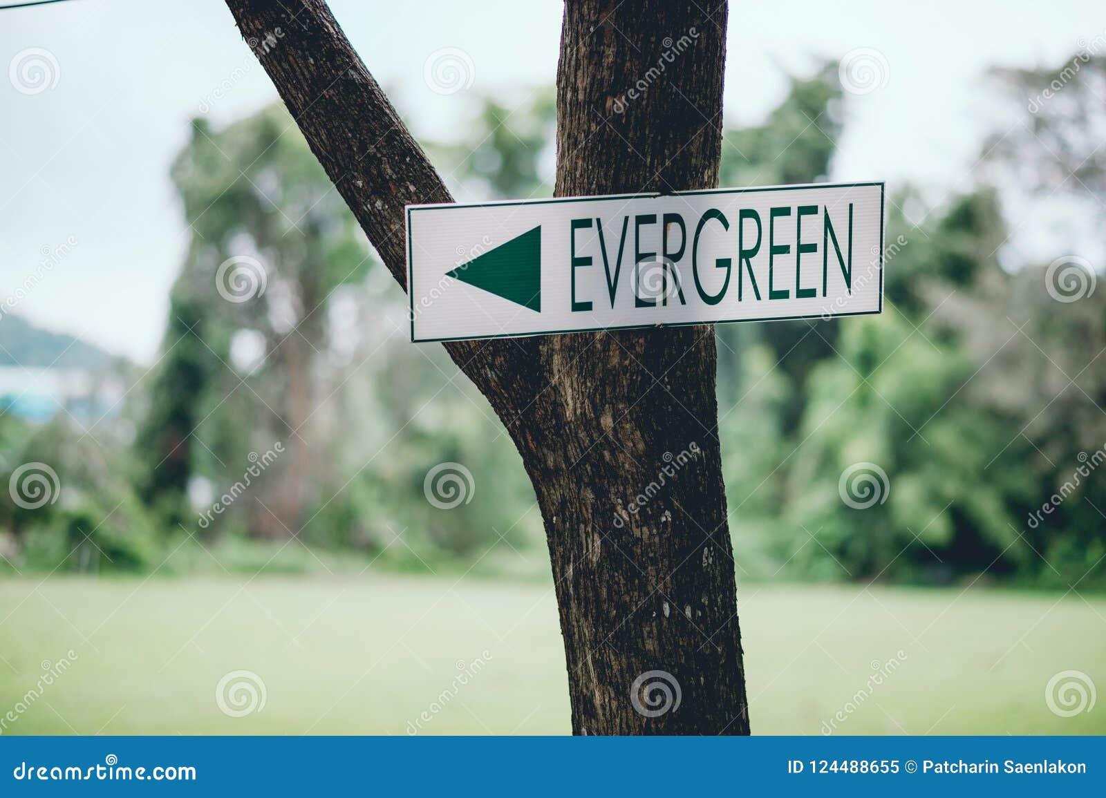 Zielony znak Wtykał na zielonym drzewie mówić sposób I approp