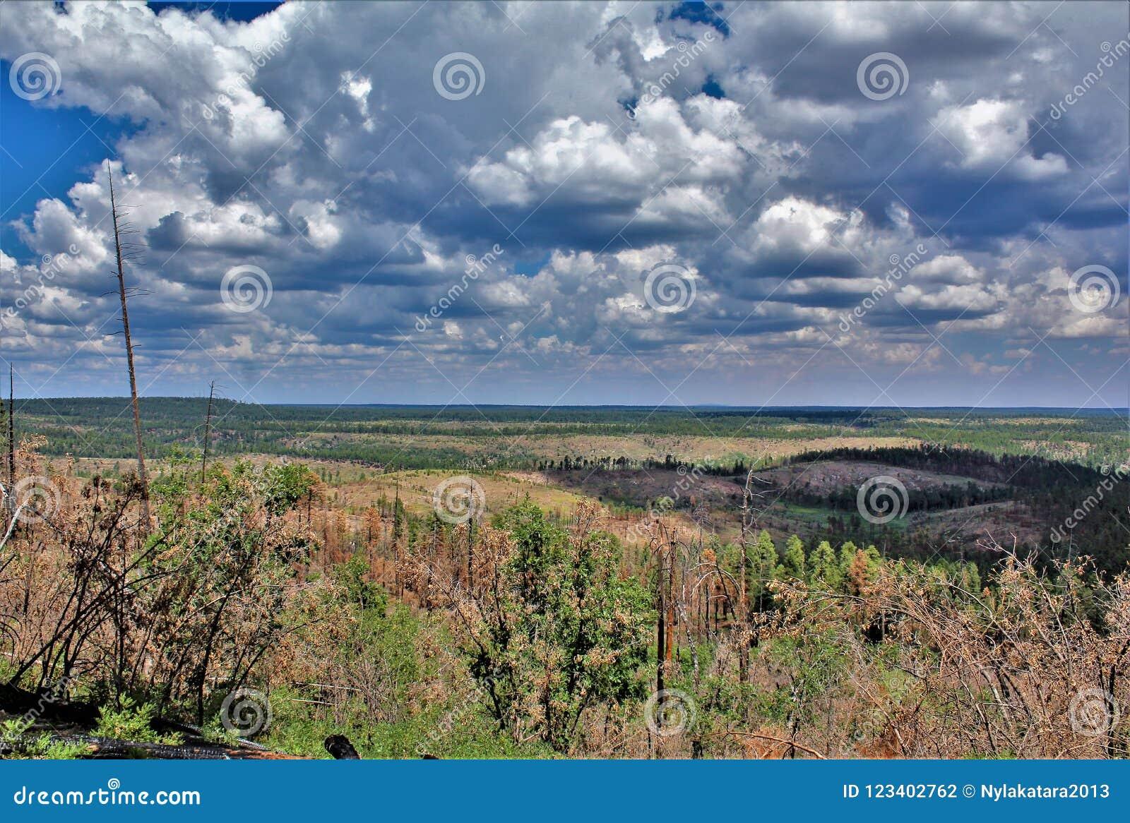 Ziemiaństwo światopogląd, Apache Sitgreaves las państwowy, Arizona, Stany Zjednoczone