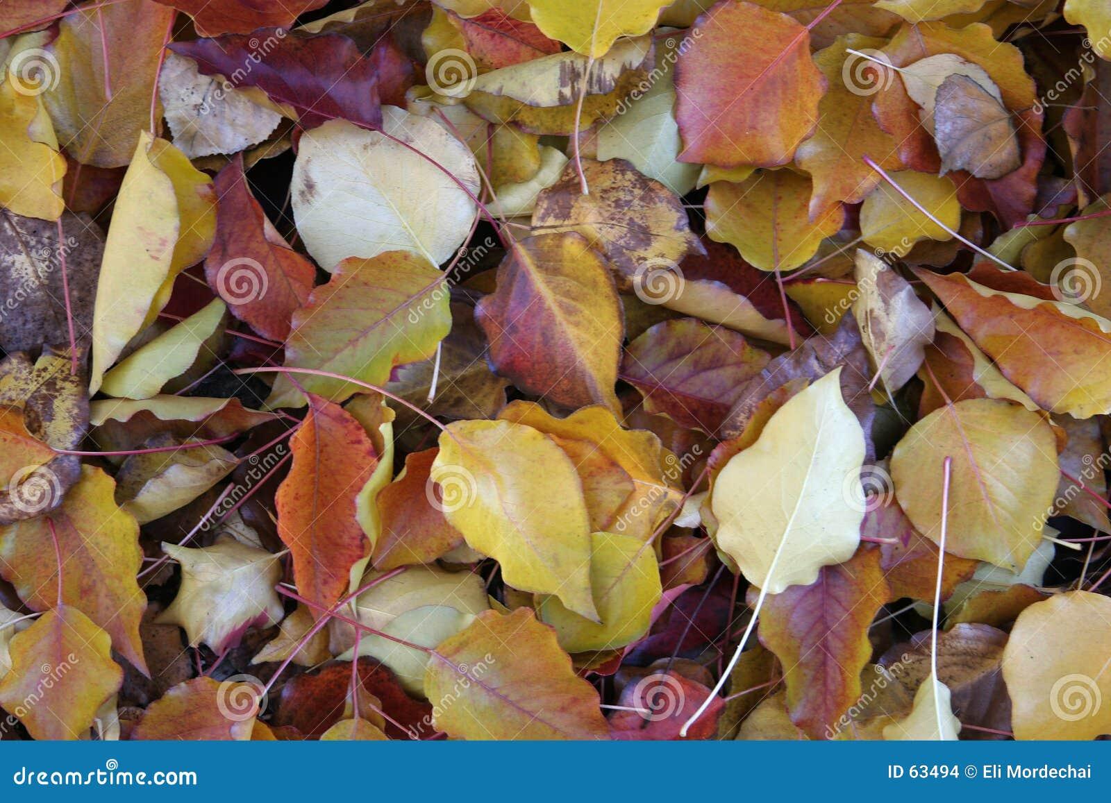 Ziemia liście