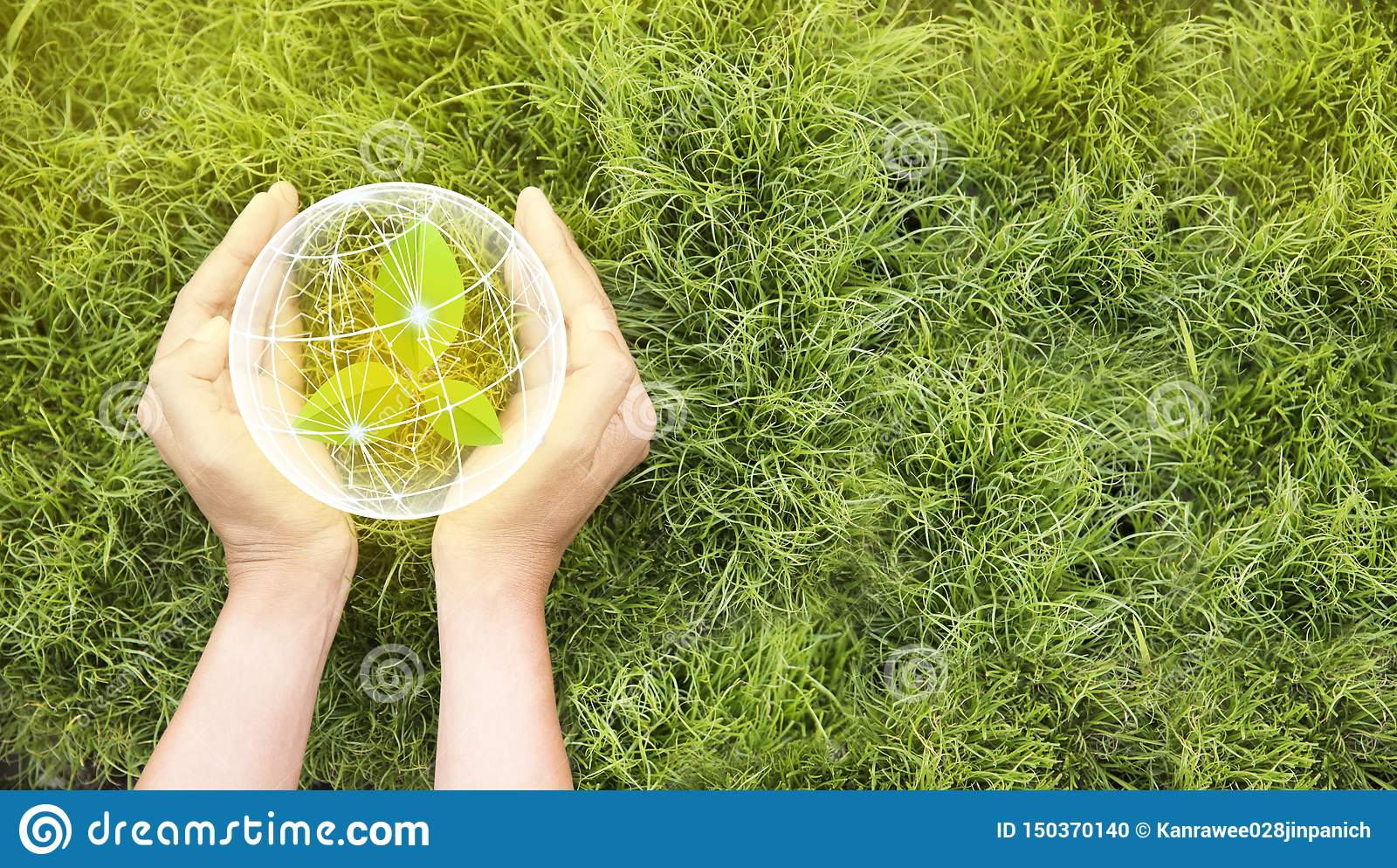 Ziemski dzie? W r?kach drzewa r rozsady Oprócz światu i innowacji pojęcia, dziewczyna trzyma małego rośliny lub drzewa sapling je